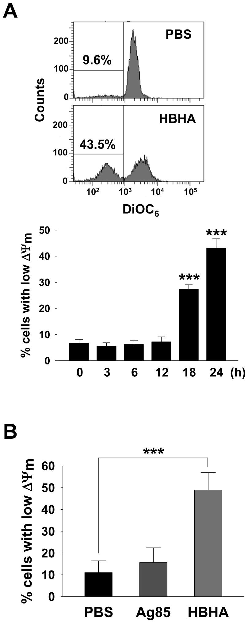 HBHA-induced the loss of ΔΨ<sub>m</sub> in macrophages.