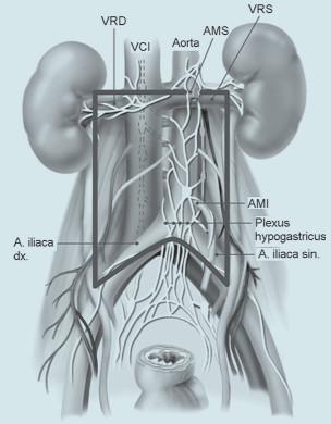 Plexus hypogastricus.
