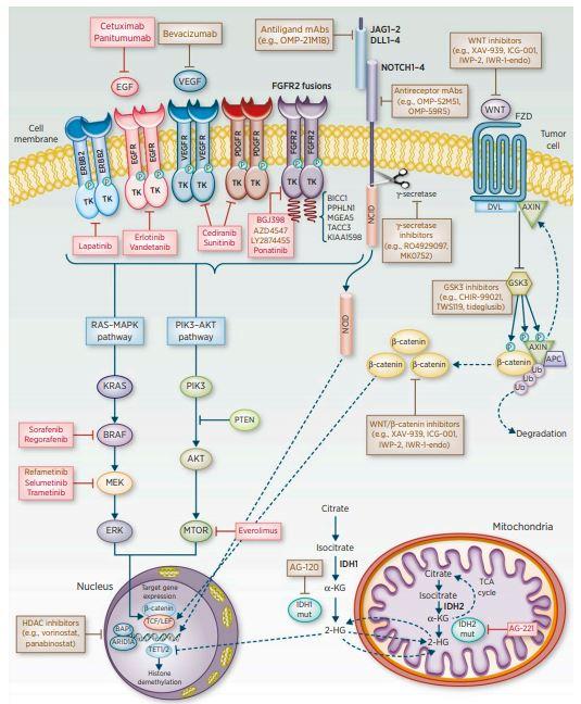 Potenciální molekulární cíle terapie u cholangiocelulárního karcinomu<br> (převzato z: American Association for Cancer Research, 2016)