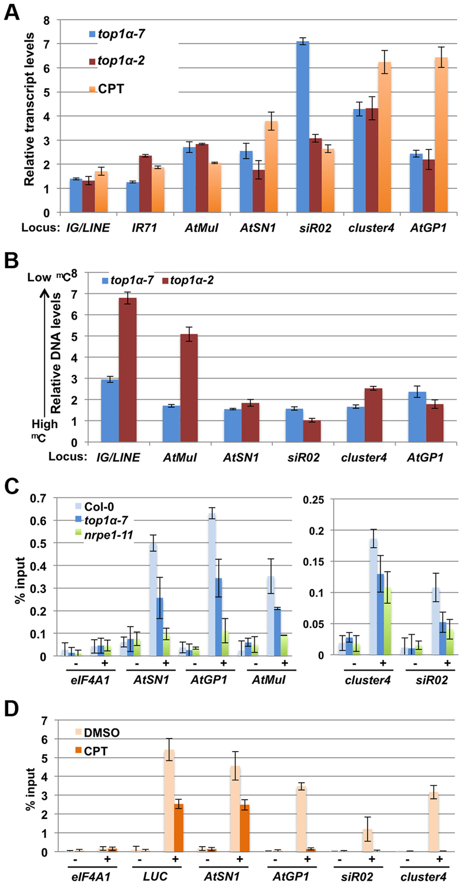 TOP1α promotes transposon silencing at endogenous RdDM target loci through H3K9me2 deposition.