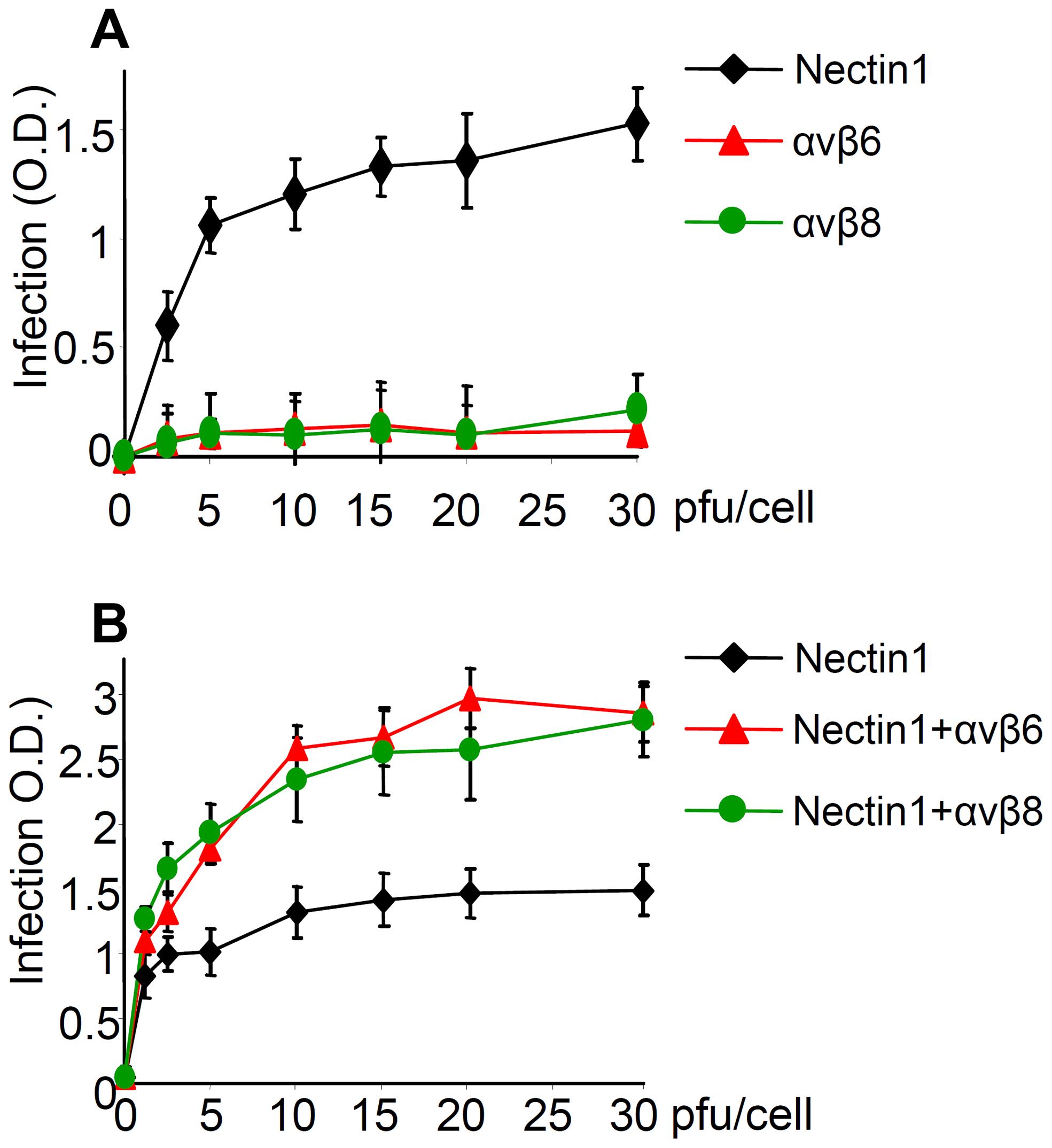 αvβ6 and αvβ8 -integrins do not substitute for nectin 1, yet they increase infection of R8102 in J cells expressing nectin 1 at low level.