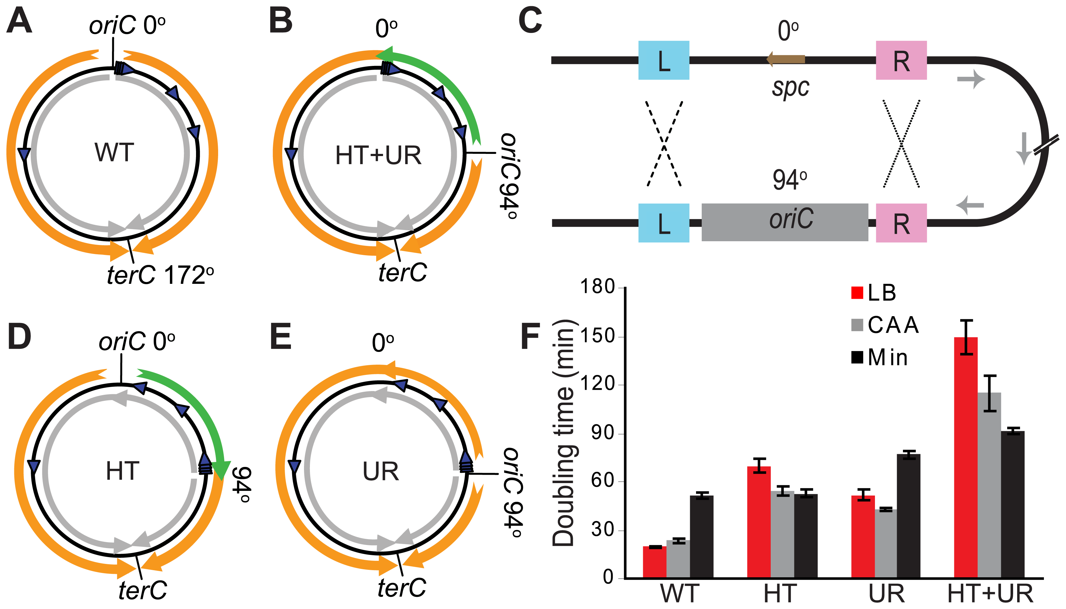 Alteration of different aspects of genome organization results in different growth defects.