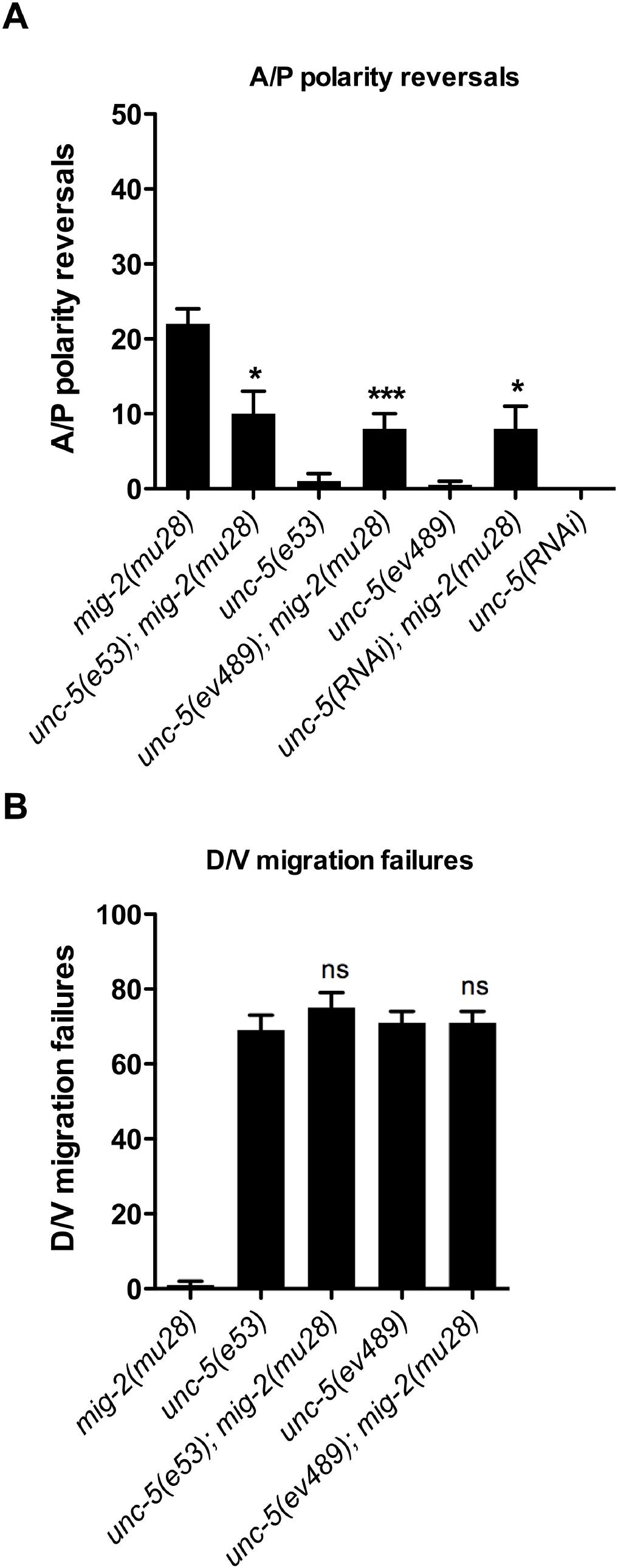 <i>unc-5</i> mutations suppress <i>mig-2(mu28)</i> mutant DTC phase 3 A/P polarity reversals, but <i>mig-2(mu28)</i> does not suppress <i>unc-5</i> mutant phase 2 D/V migration failures.
