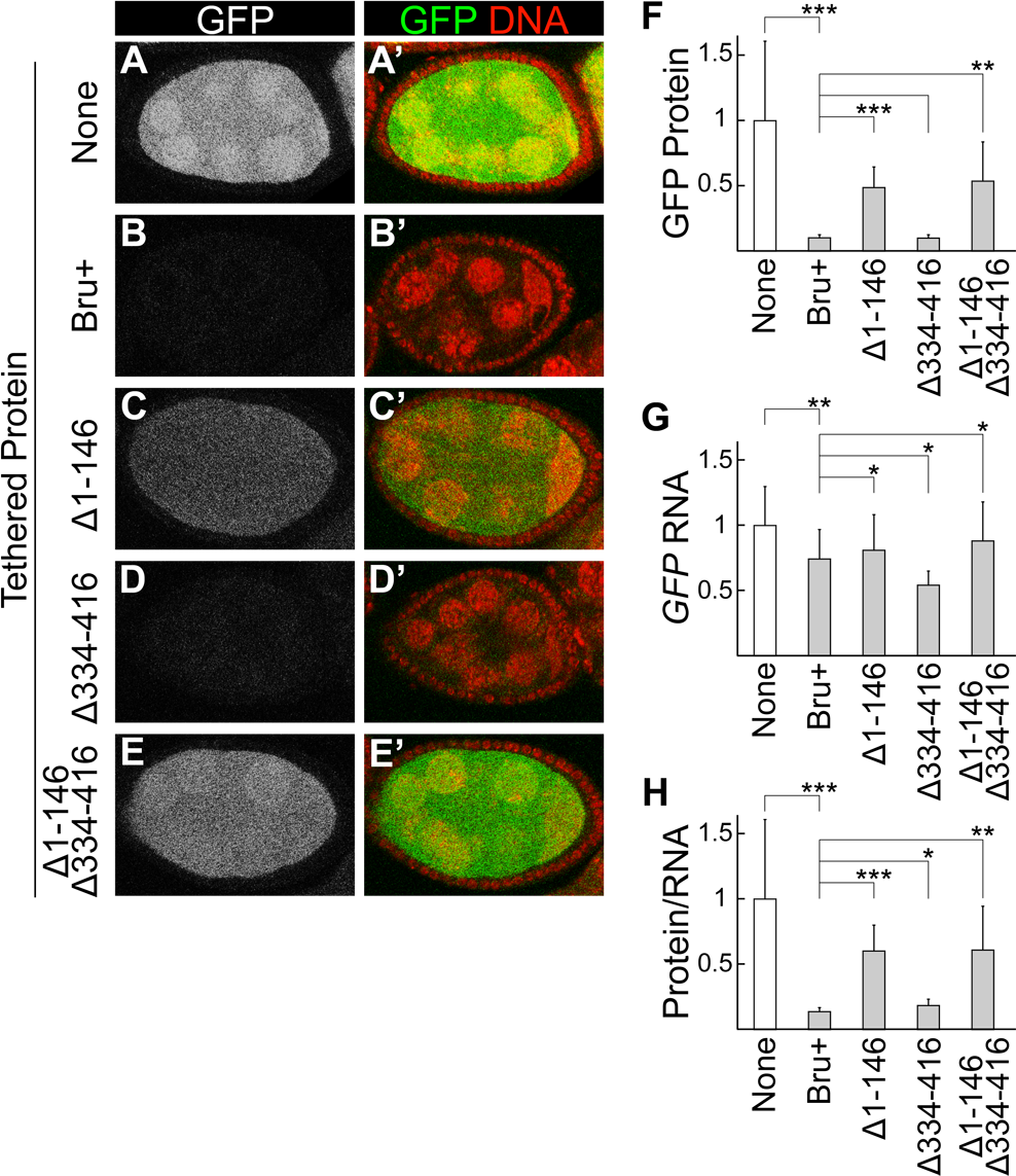 The Bru amino-terminal domain is essential for translational repression in a tethering assay.