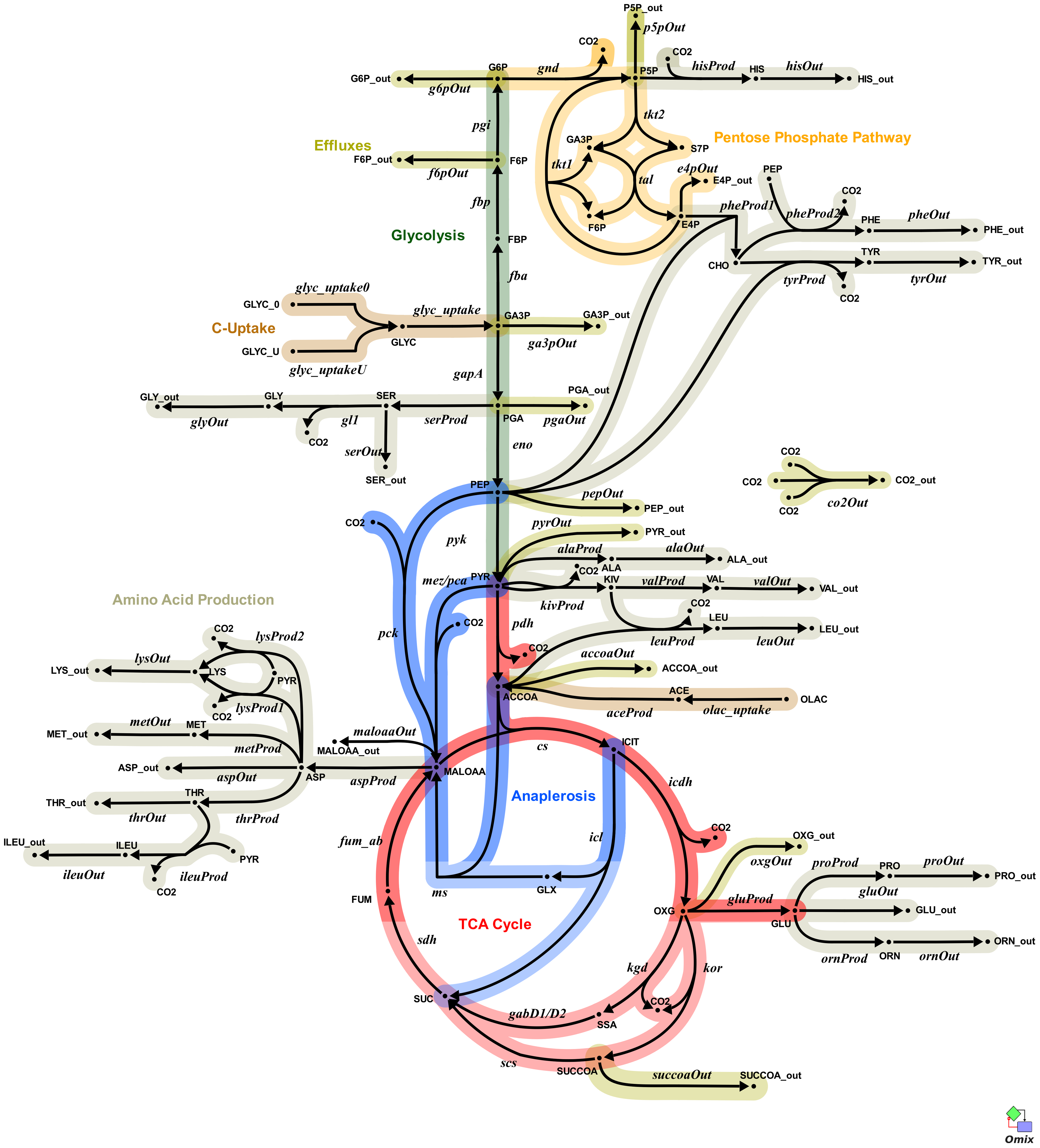 Metabolic network of the central metabolism of <i>Mycobacterium bovis</i> BCG.