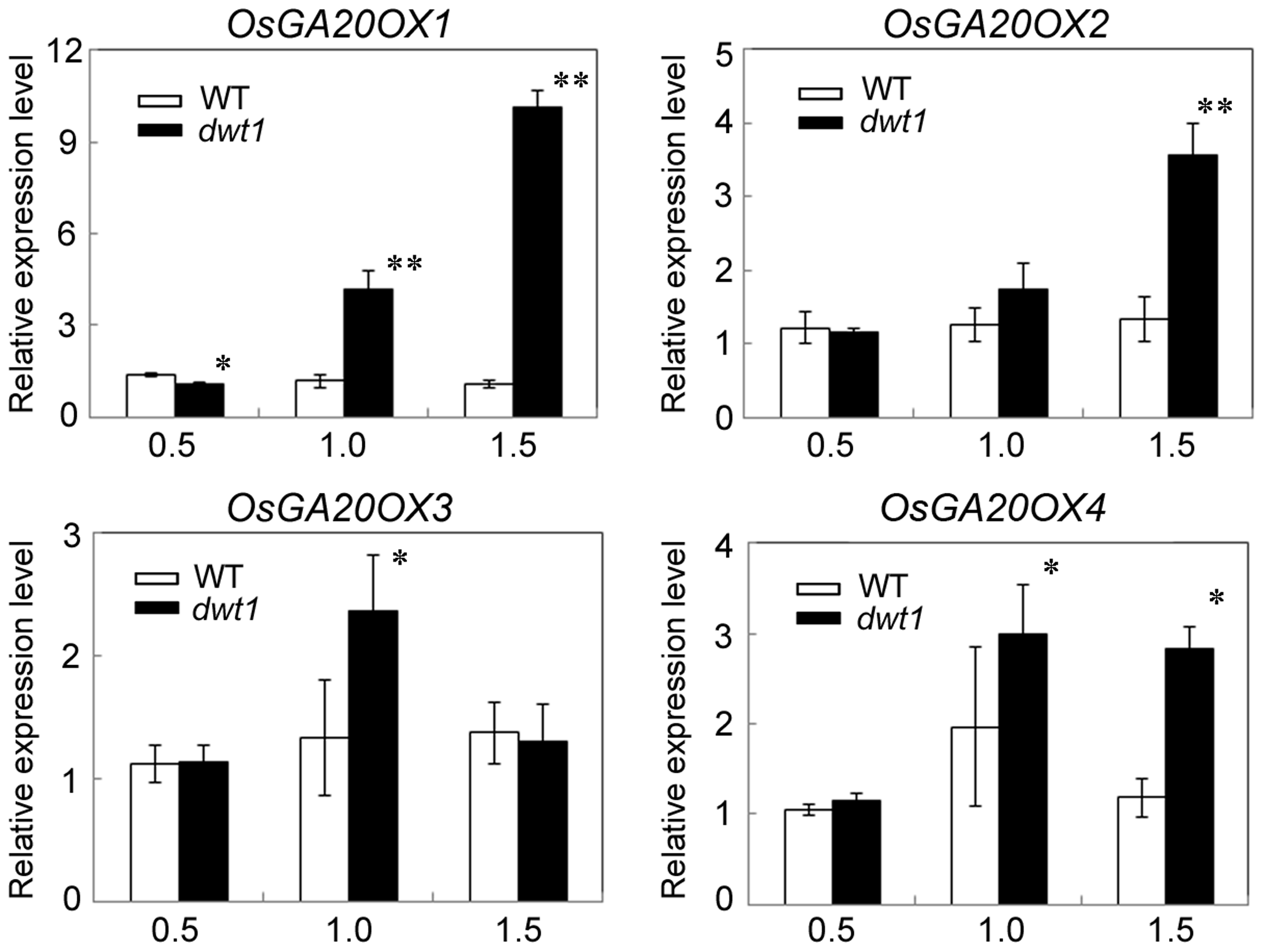 <i>OsGA20OX</i> genes have increased expression in <i>dwt1</i>.