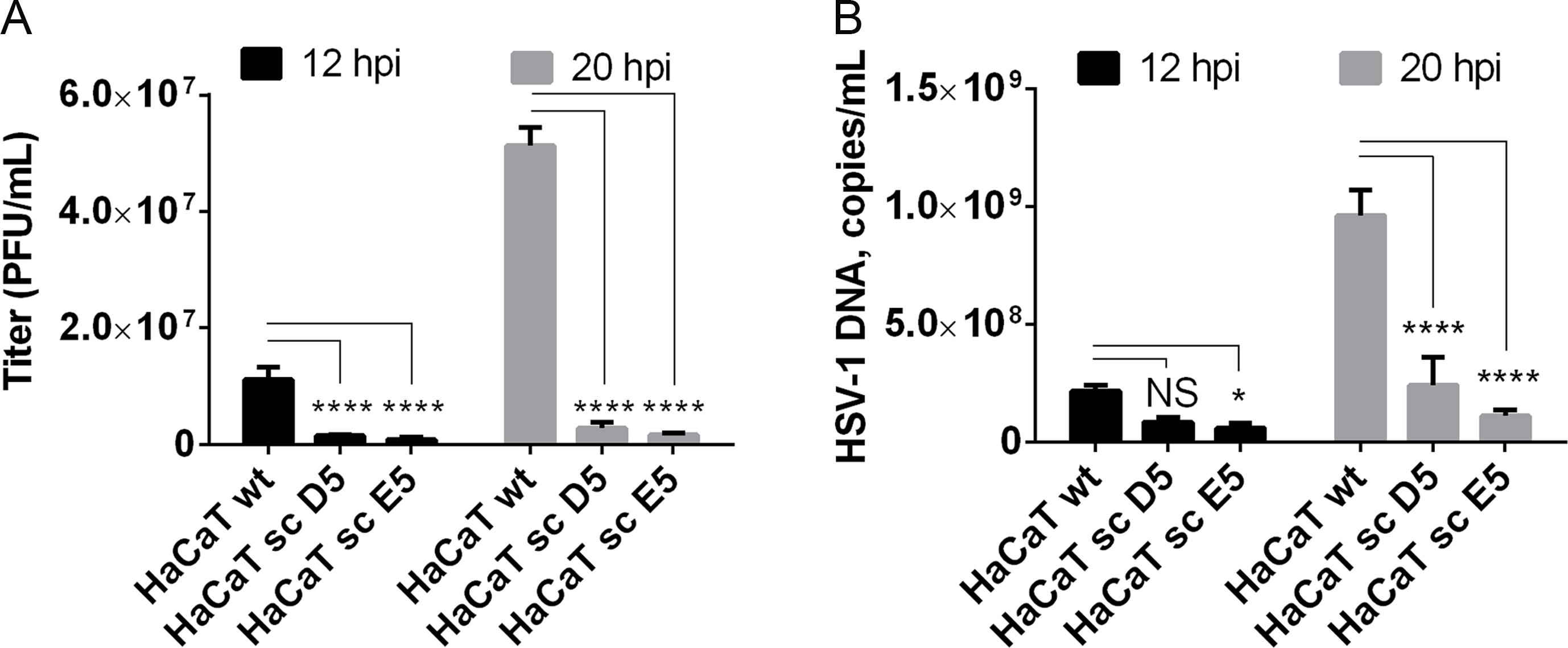 Elongation of O-linked glycans affects HSV-1 secretion/infectivity.