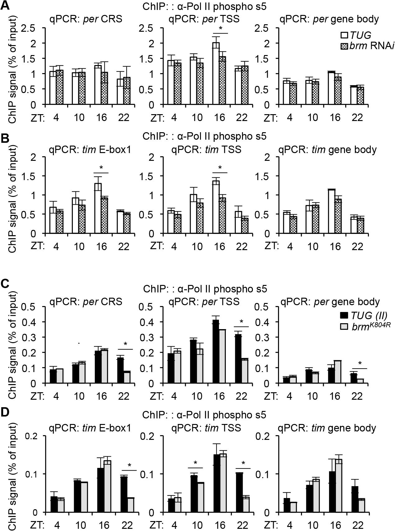 BRM-established chromatin landscape plays a role in regulating RNAPII dynamics.
