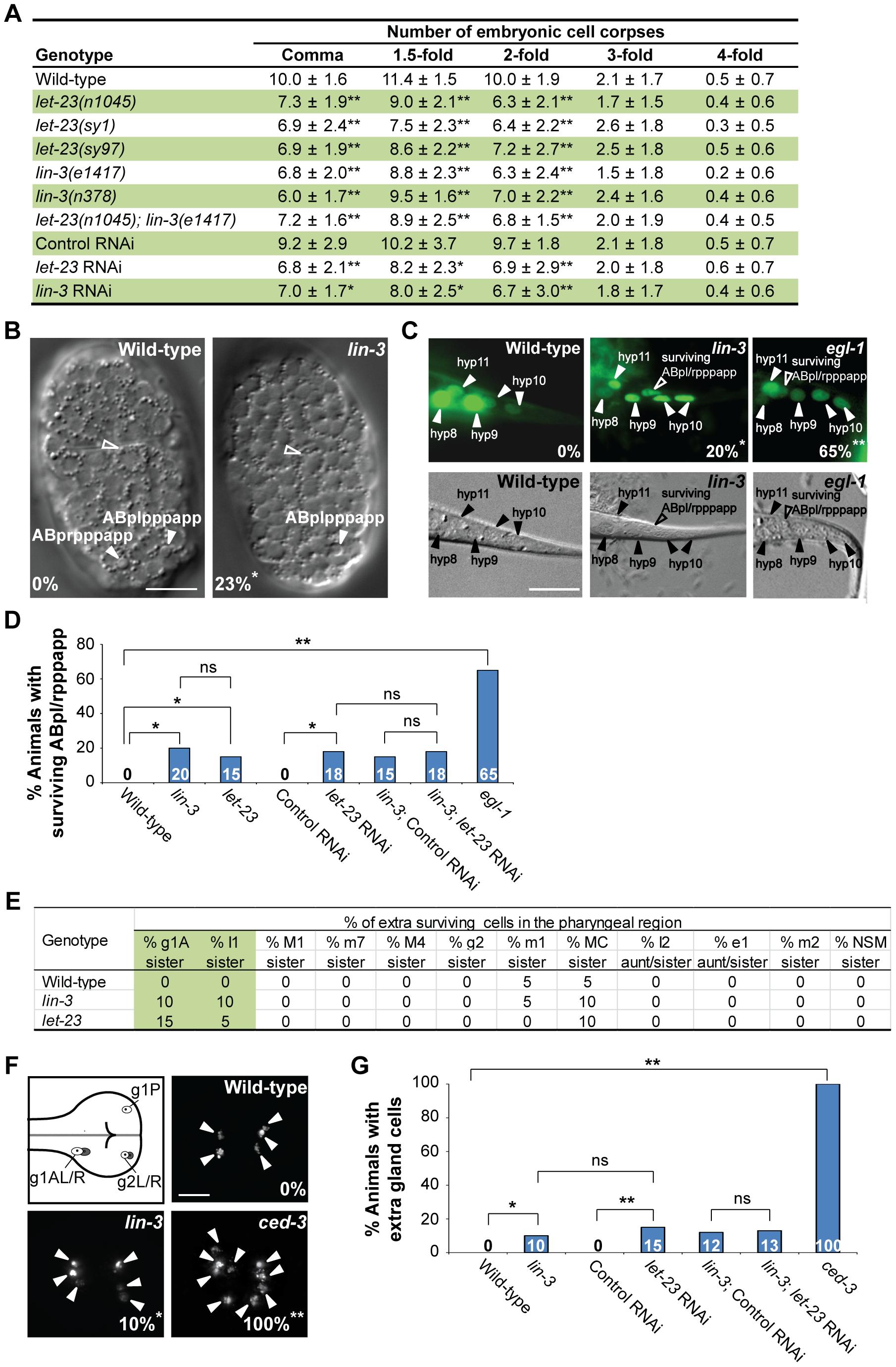 <i>lin-3</i> and <i>let-23</i> promote specific PCDs in <i>C. elegans</i>.
