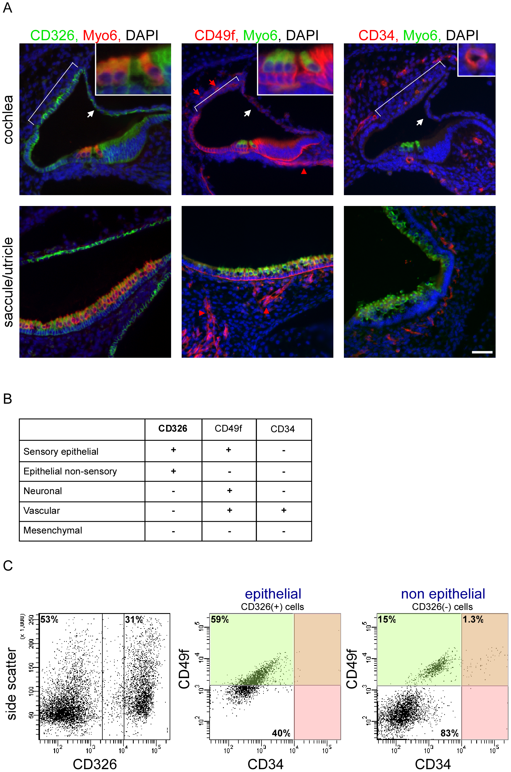 A novel cell type–specific protocol to sort the inner ear sensory organs.