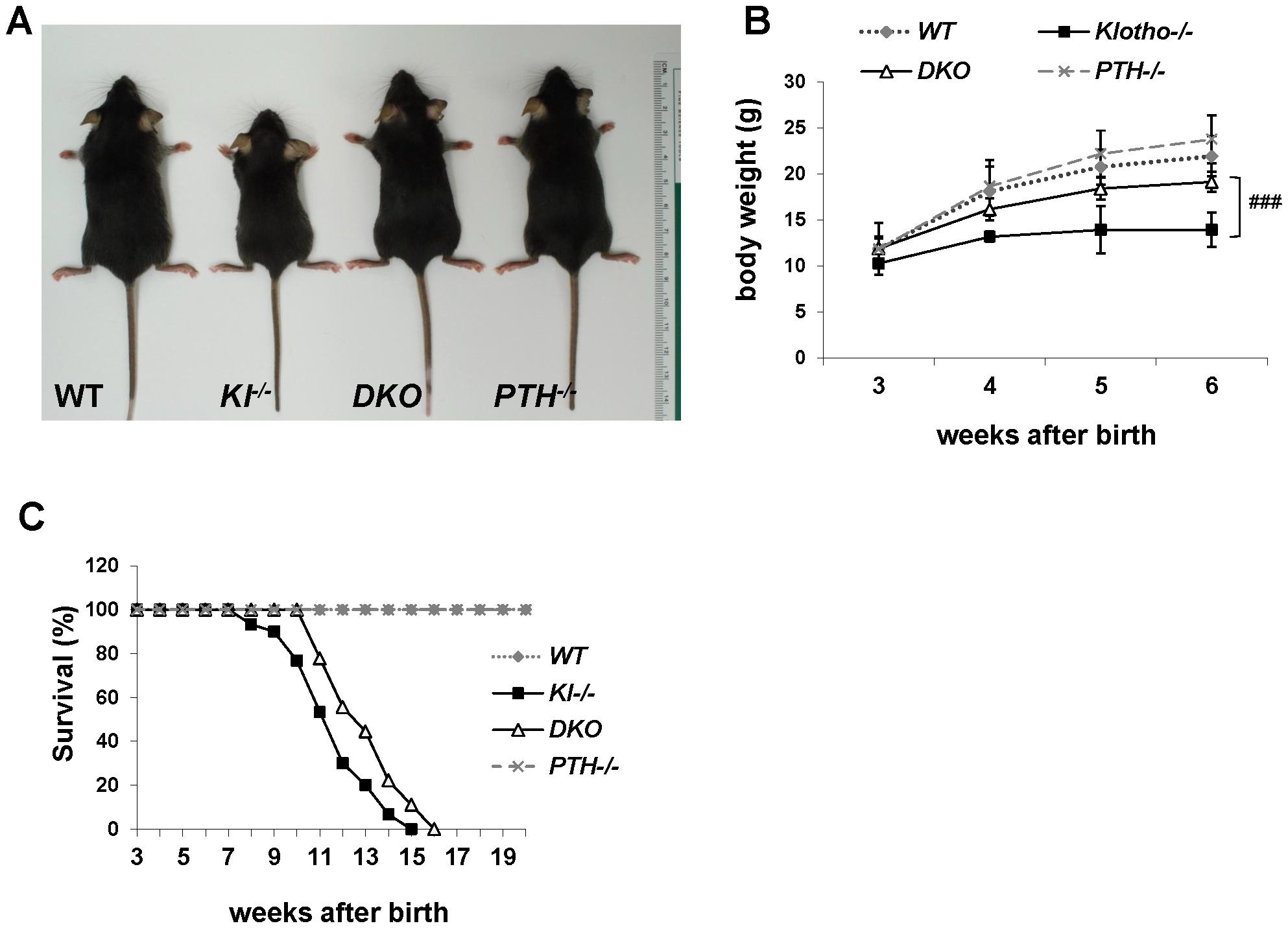 Macroscopic phenotype of 6-wk-old mice.