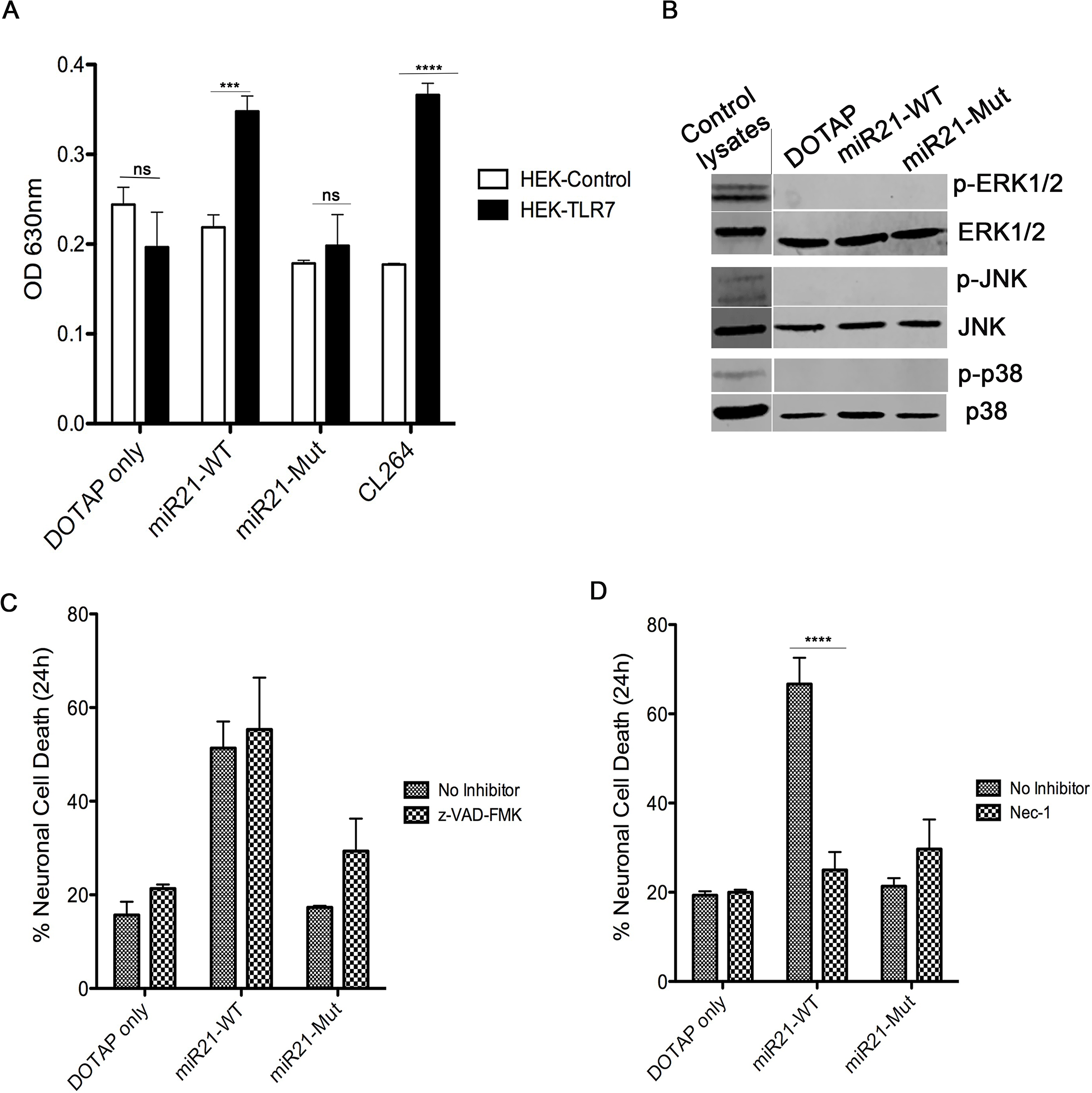 miR-21 neurotoxicity is rescued by Nec-1, a necroptosis inhibitor.