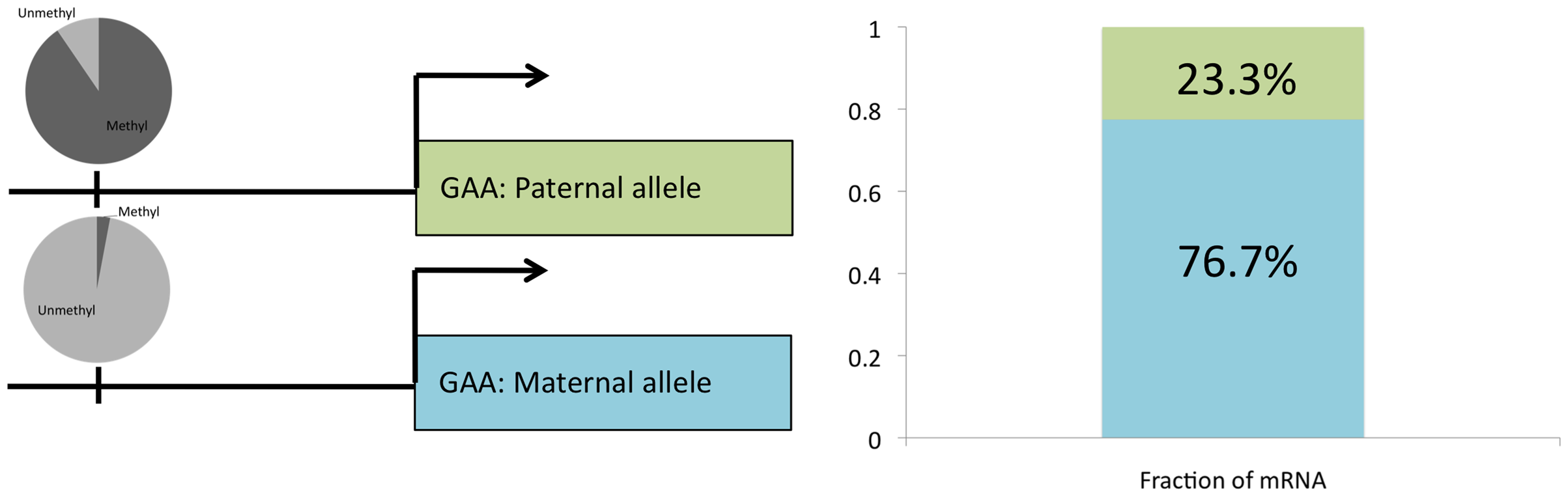 Allele-specific gene expression overlaps with ASM.