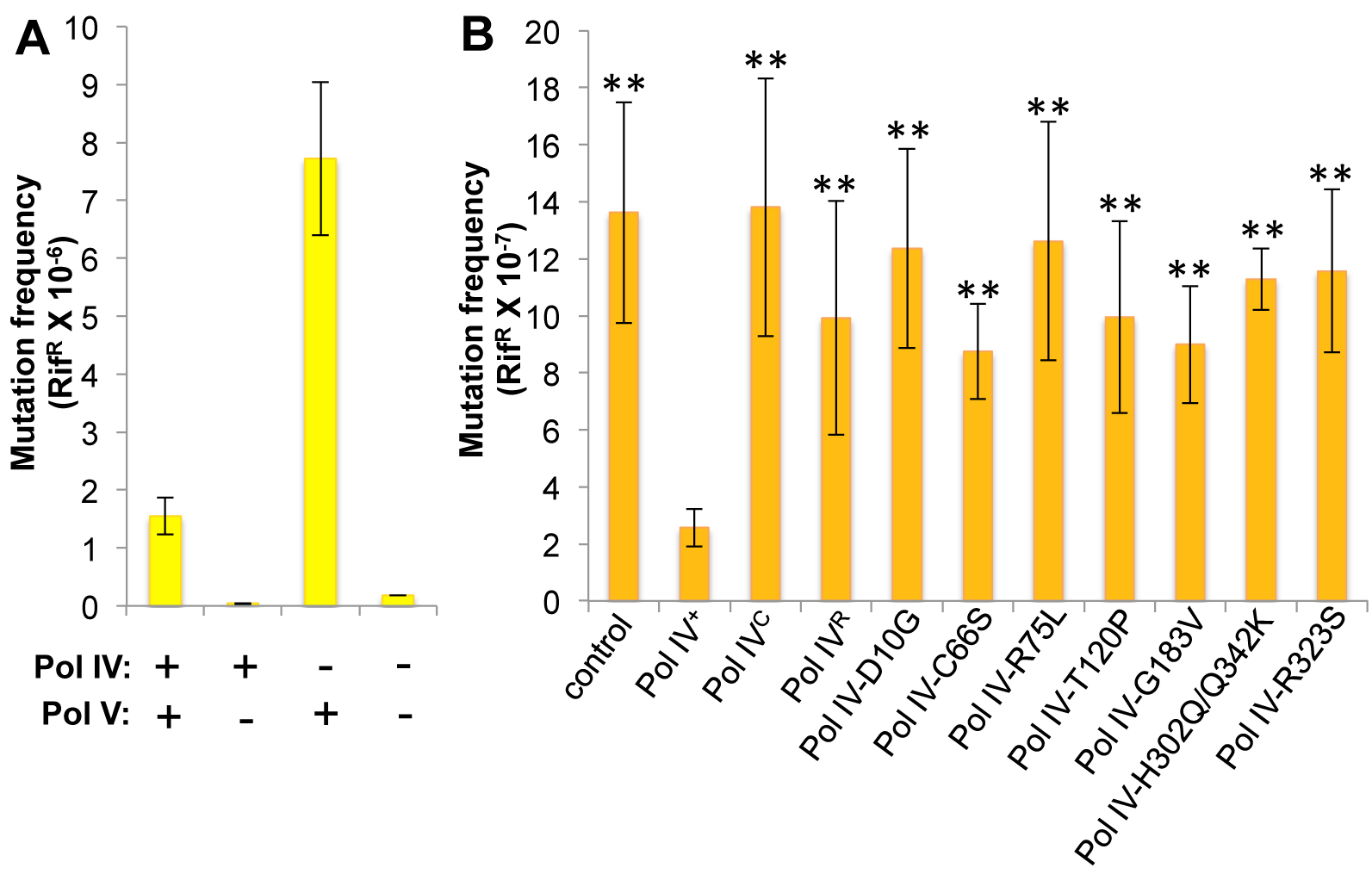 Ability of Pol IV mutants to tolerate MMS-induced DNA damage <i>in vivo</i>.