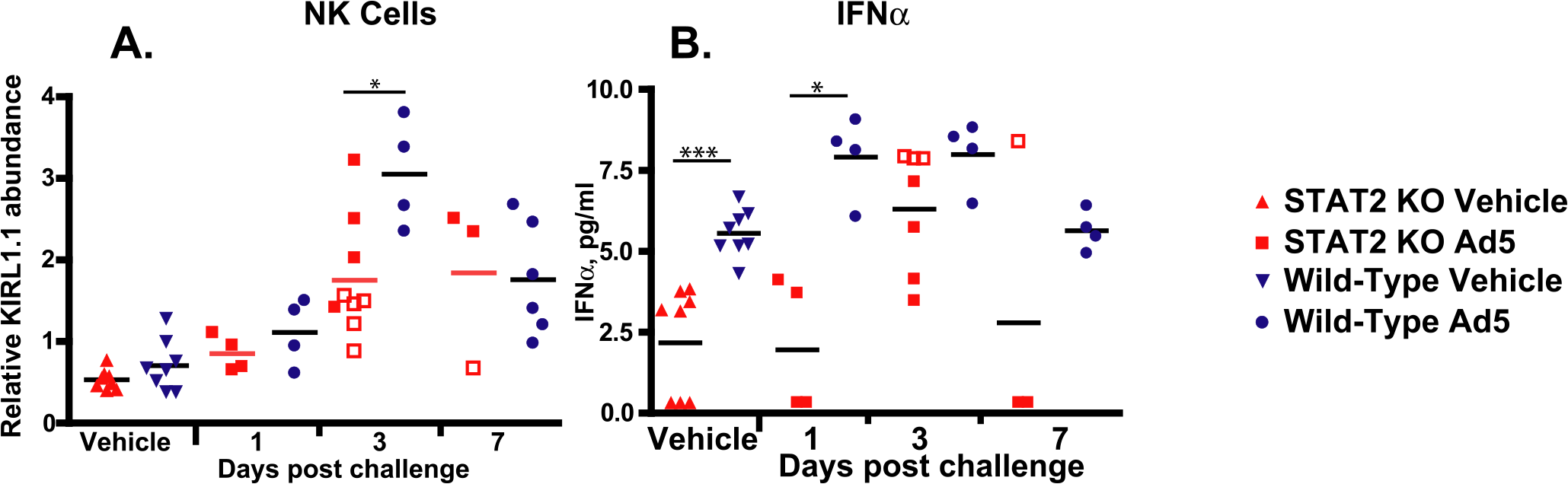 STAT2 KO hamsters have a blunted natural killer cell response (A), and delayed production of IFNα (B).