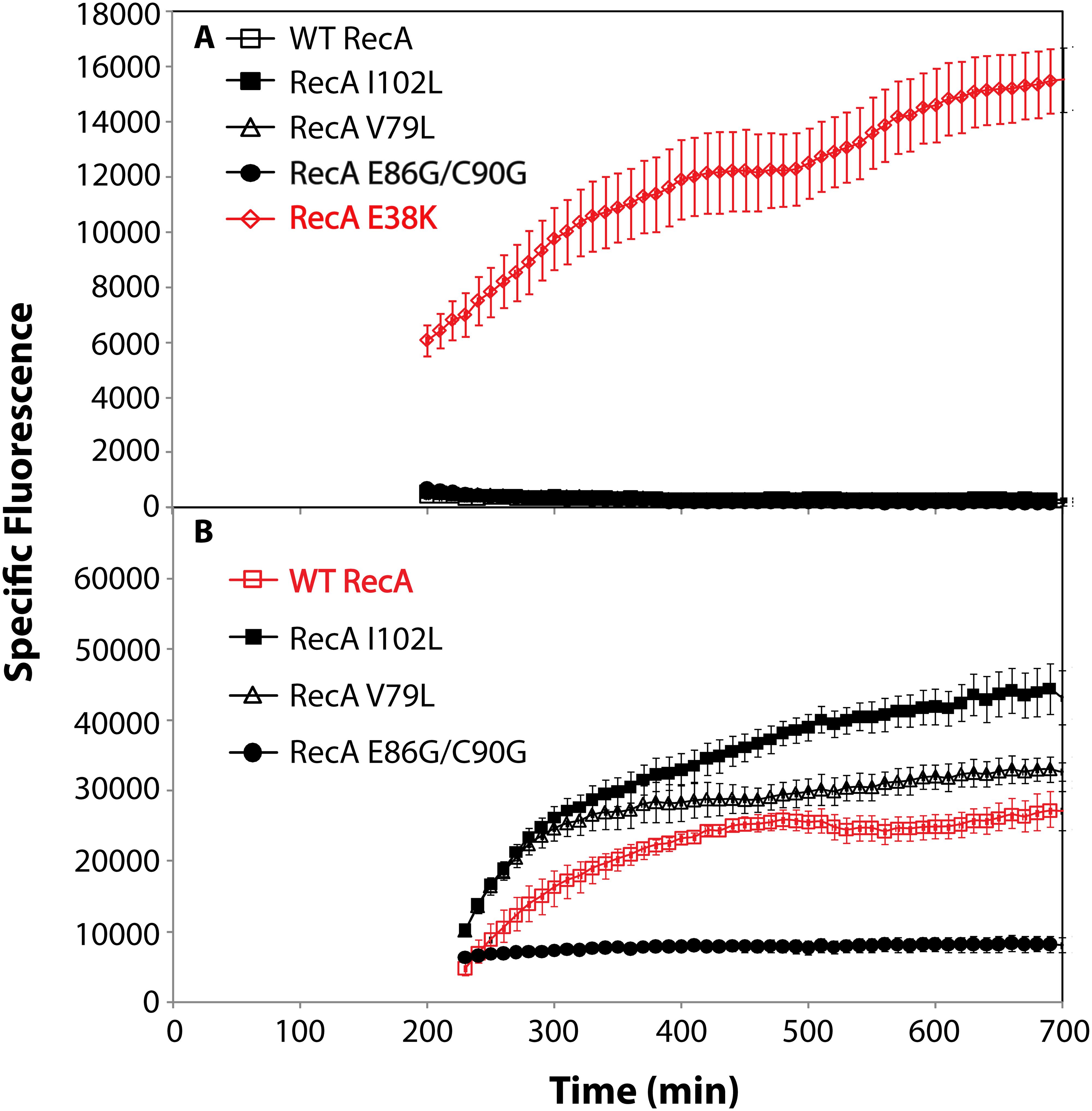 SOS response of RecA variant proteins.