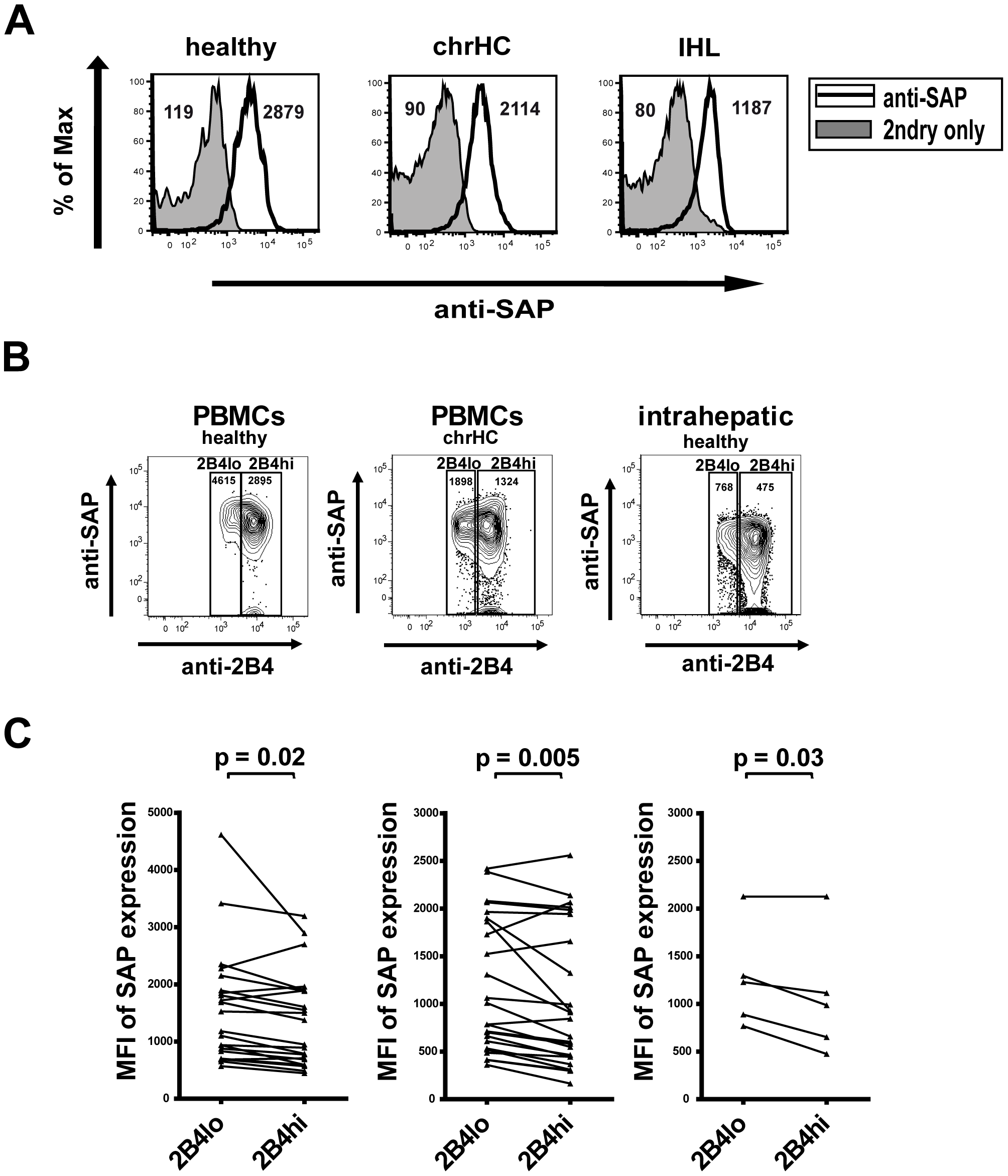 Expression of SAP by CD8+ T cells.