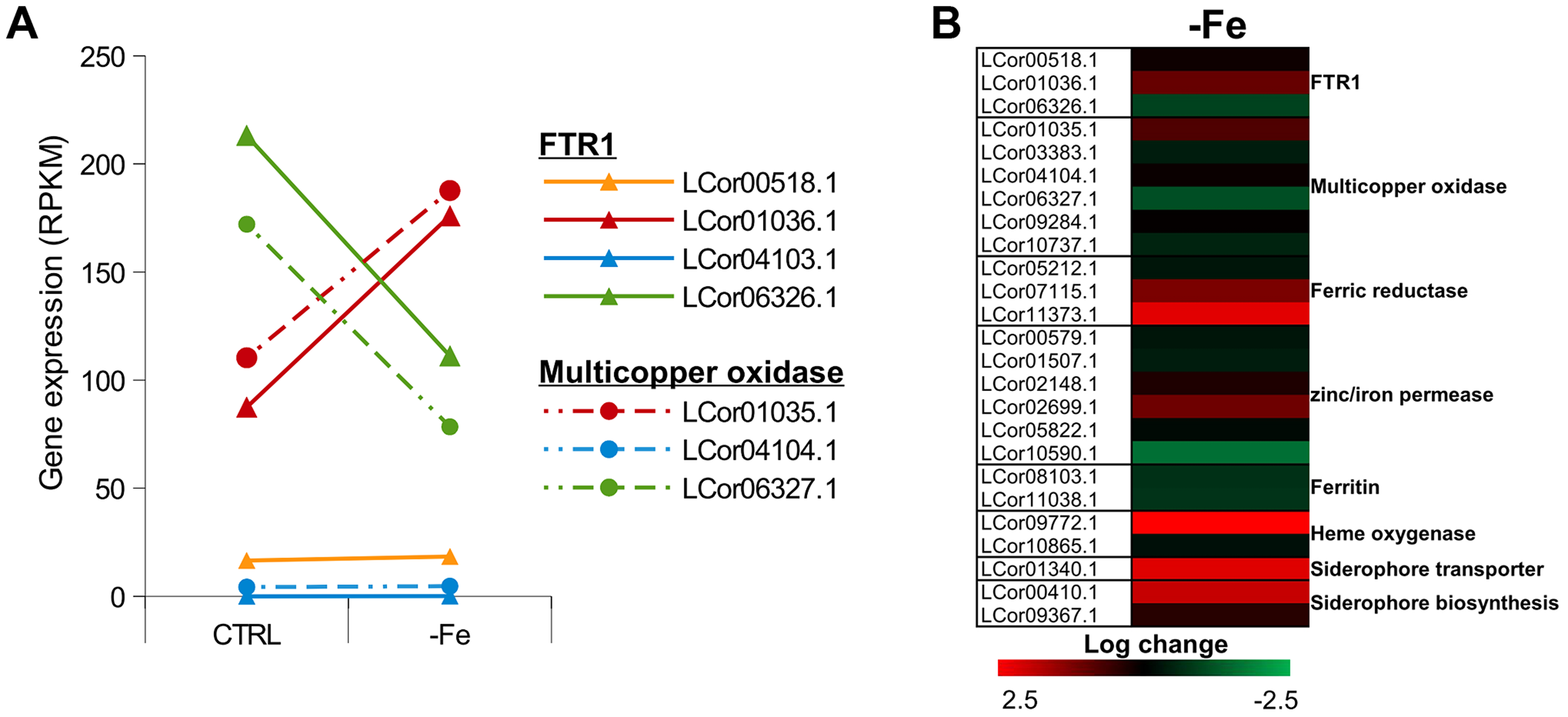 Expression of iron uptake genes under iron limited conditions.