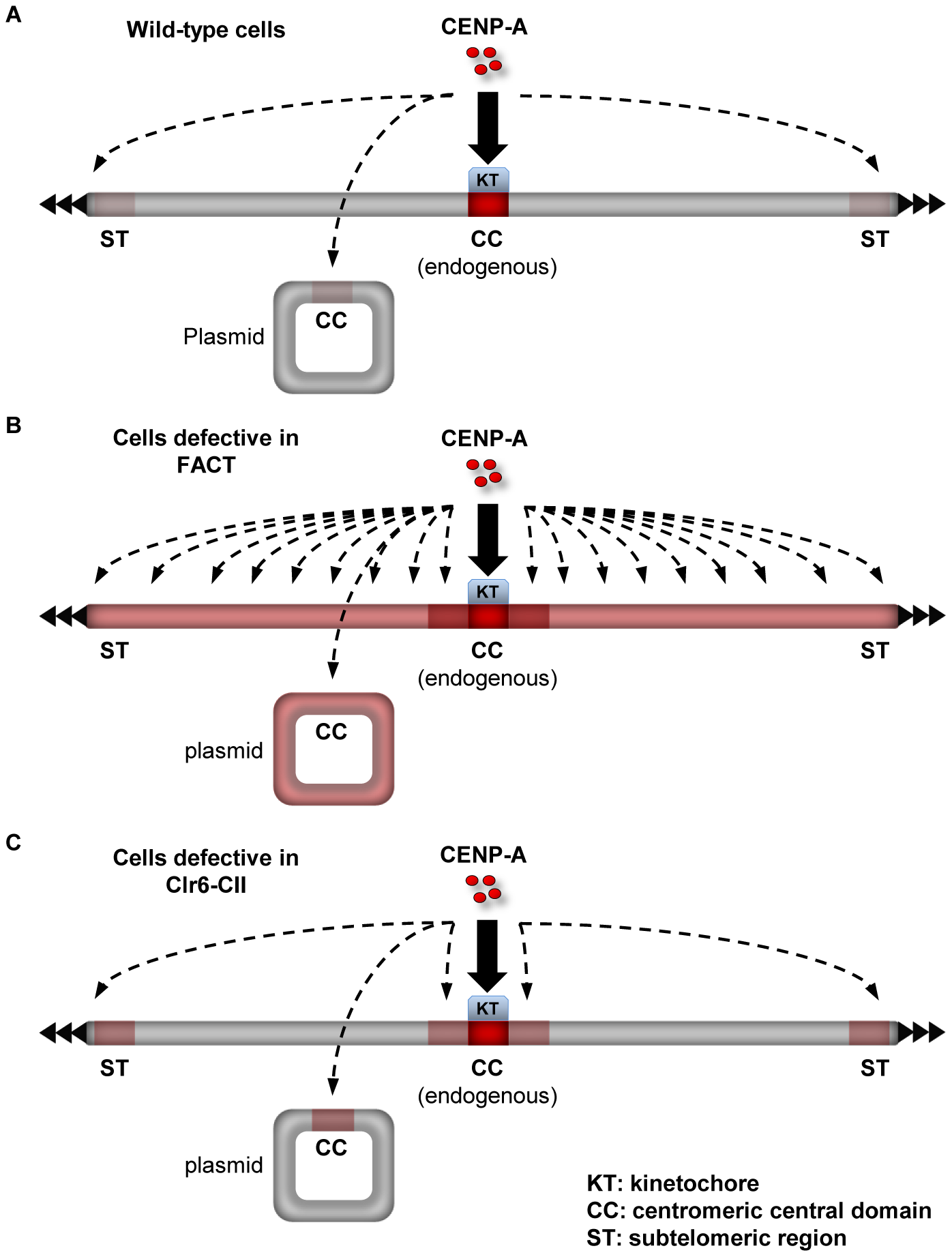 Summary on the role of factors that promote the integrity of H3 chromatin during transcription in preventing promiscuous CENP-A<sup>Cnp1</sup> deposition.