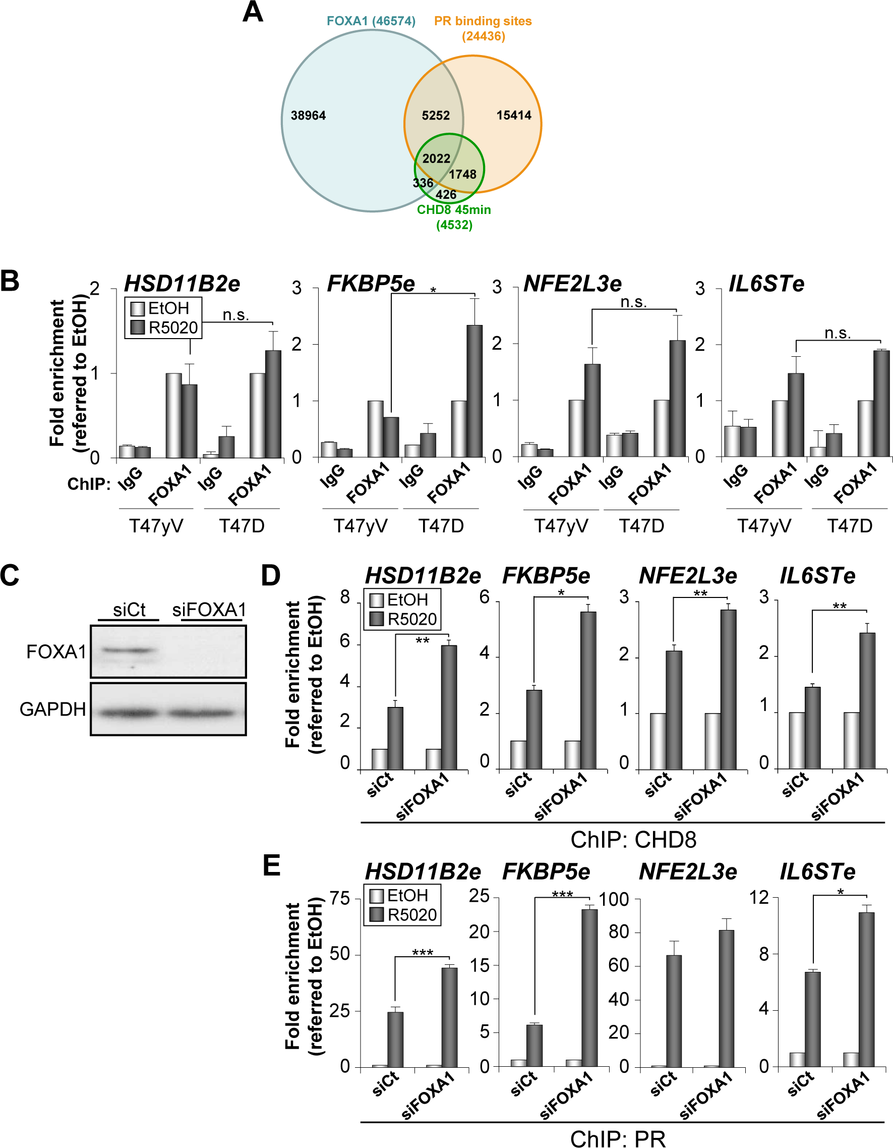 Depletion of FOXA1 stimulates PR and CHD8 recruitment to PRbs.