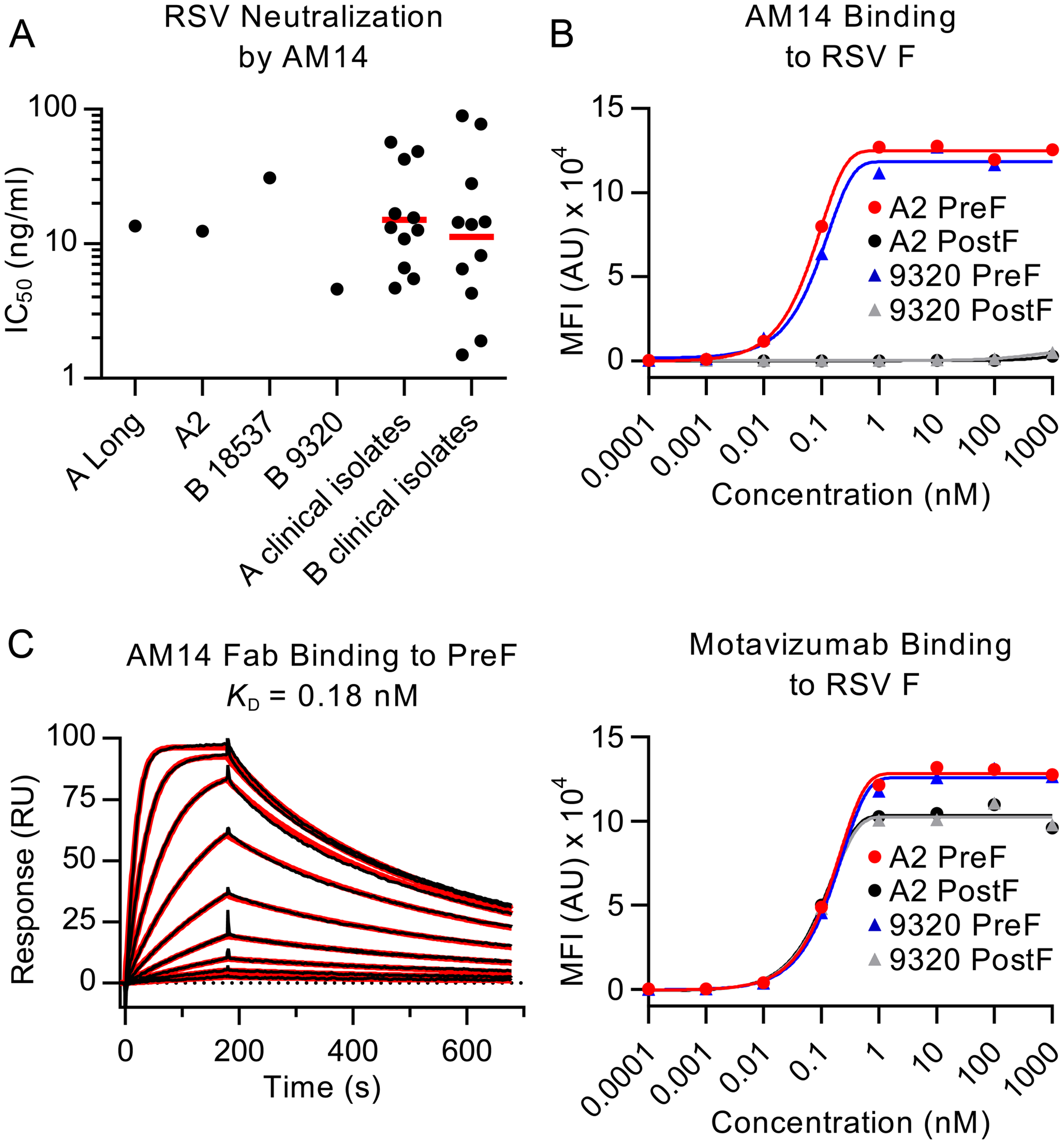 AM14 is a prefusion-specific neutralizing antibody.