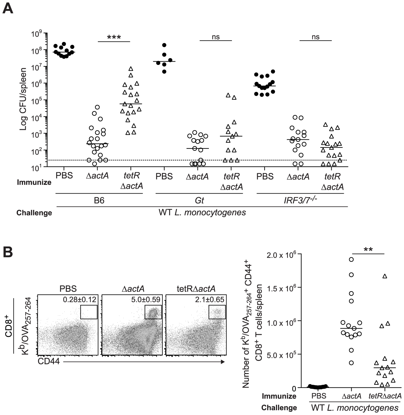 Immunization with a c-di-AMP hyper-secreting strain of <i>L. monocytogenes</i> reduces CD8<sup>+</sup> T cell expansion and protective immunity following challenge.