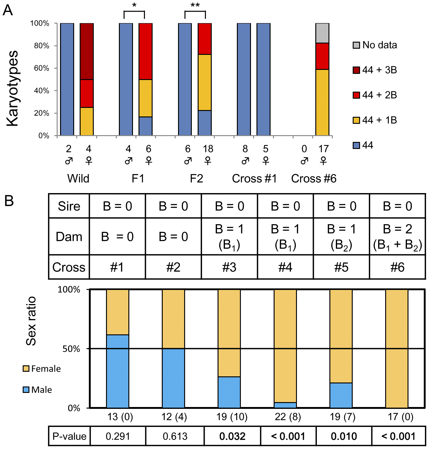 A female-biased sex ratio resulting from the presence of female-specific B chromosomes in <i>L. rubripinnis</i>.