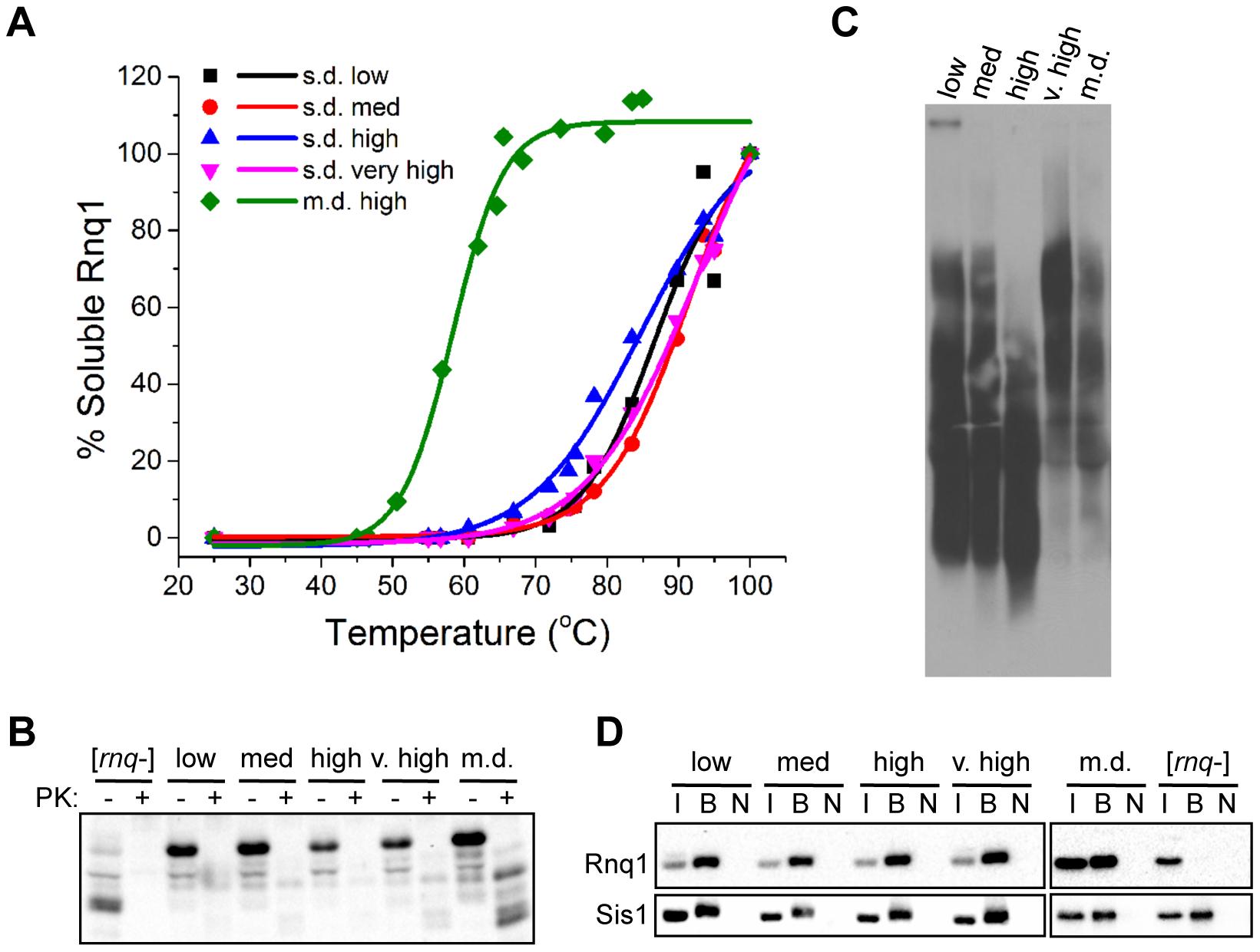 Biophysical parameters associated with fiber fragmentation do not distinguish [<i>RNQ</i>+] variants.