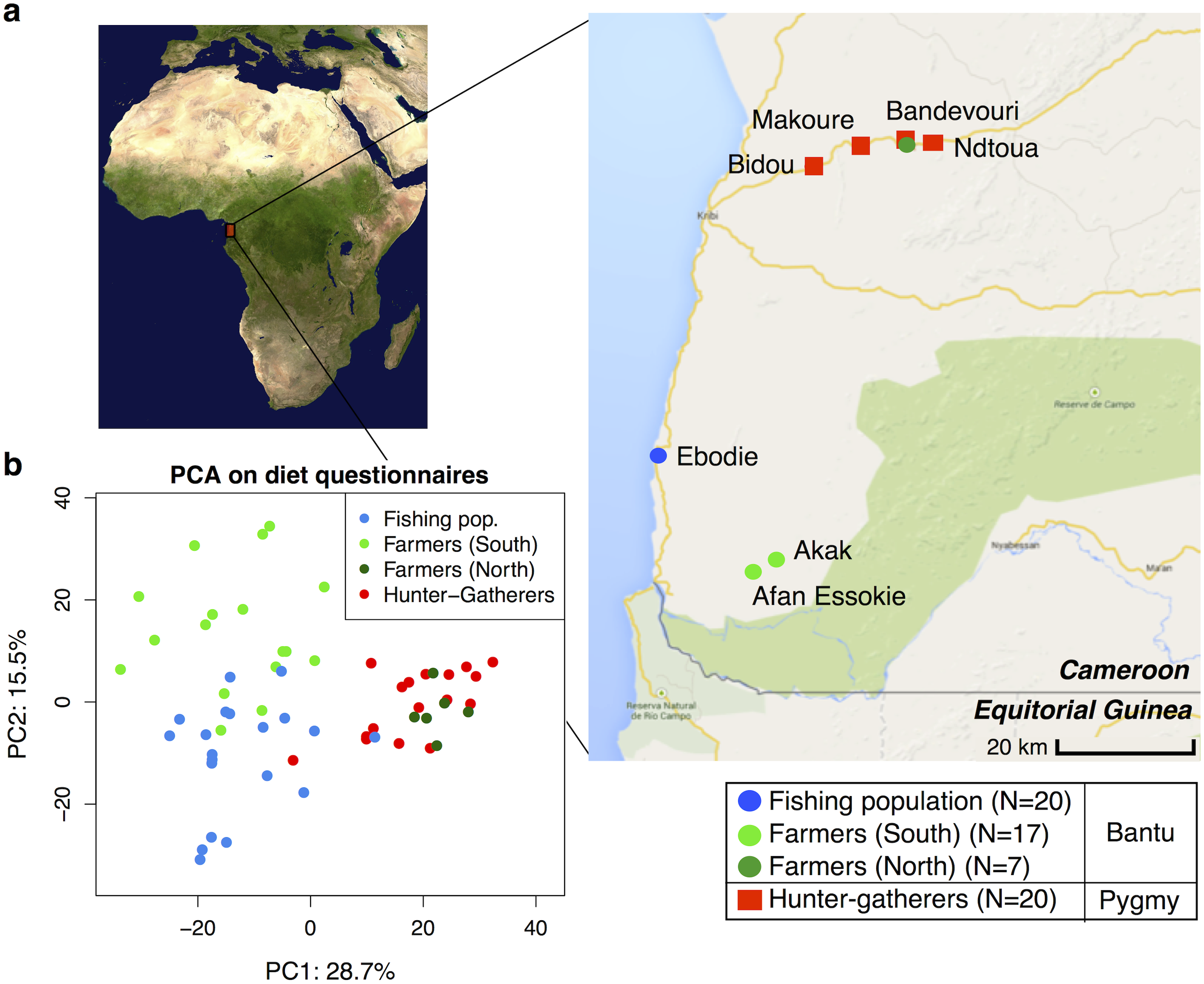 (a) Map showing the geographic locations of the villages sampled in Southwest Cameroon, the number of samples (N) collected for each subsistence group (the fishing population, farmers from the South, farmers from the North, and hunter-gatherers), and their genetic ancestry (Bantu or Pygmy).