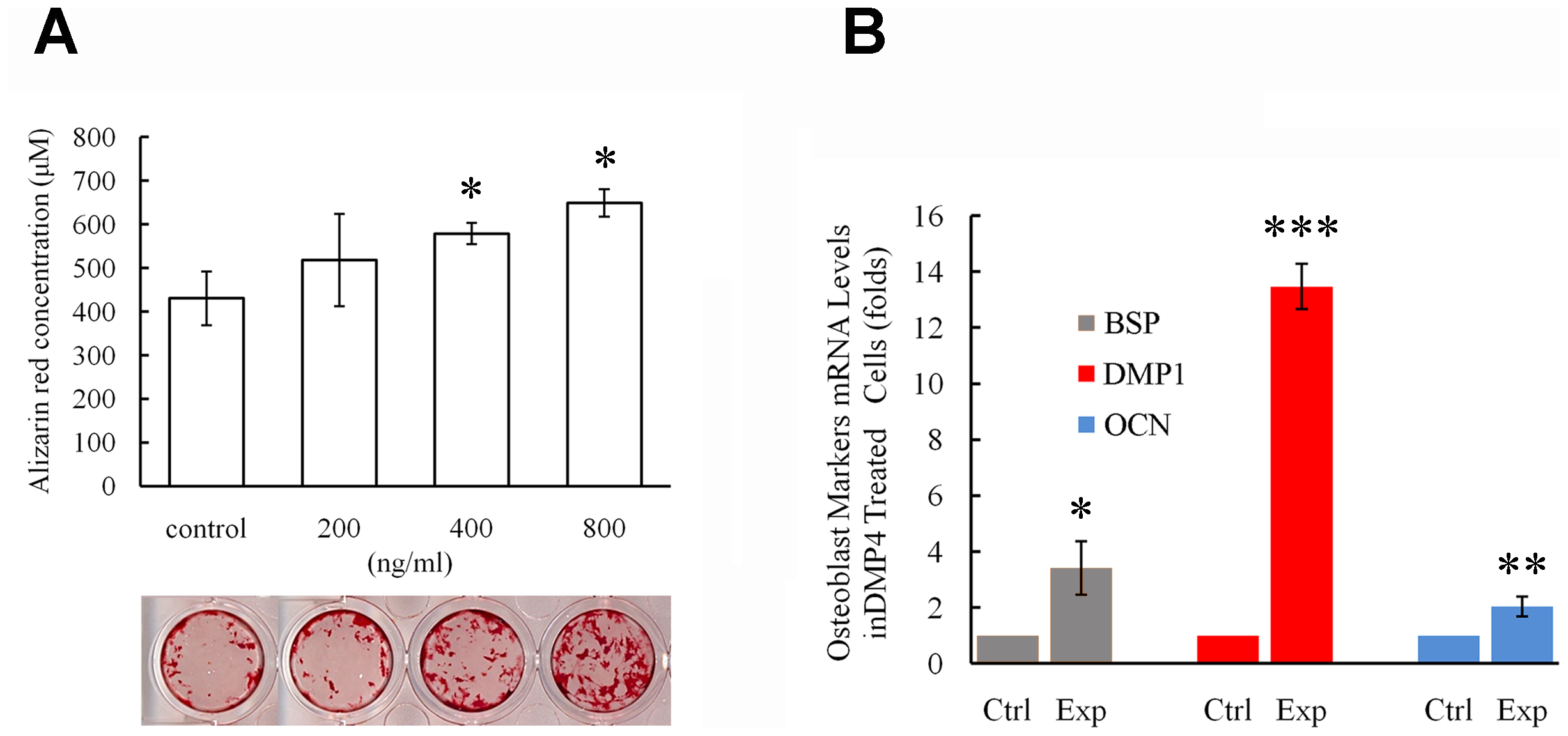 Recombinant FAM20C promotes the differentiation of MC3T3-E1 cells.