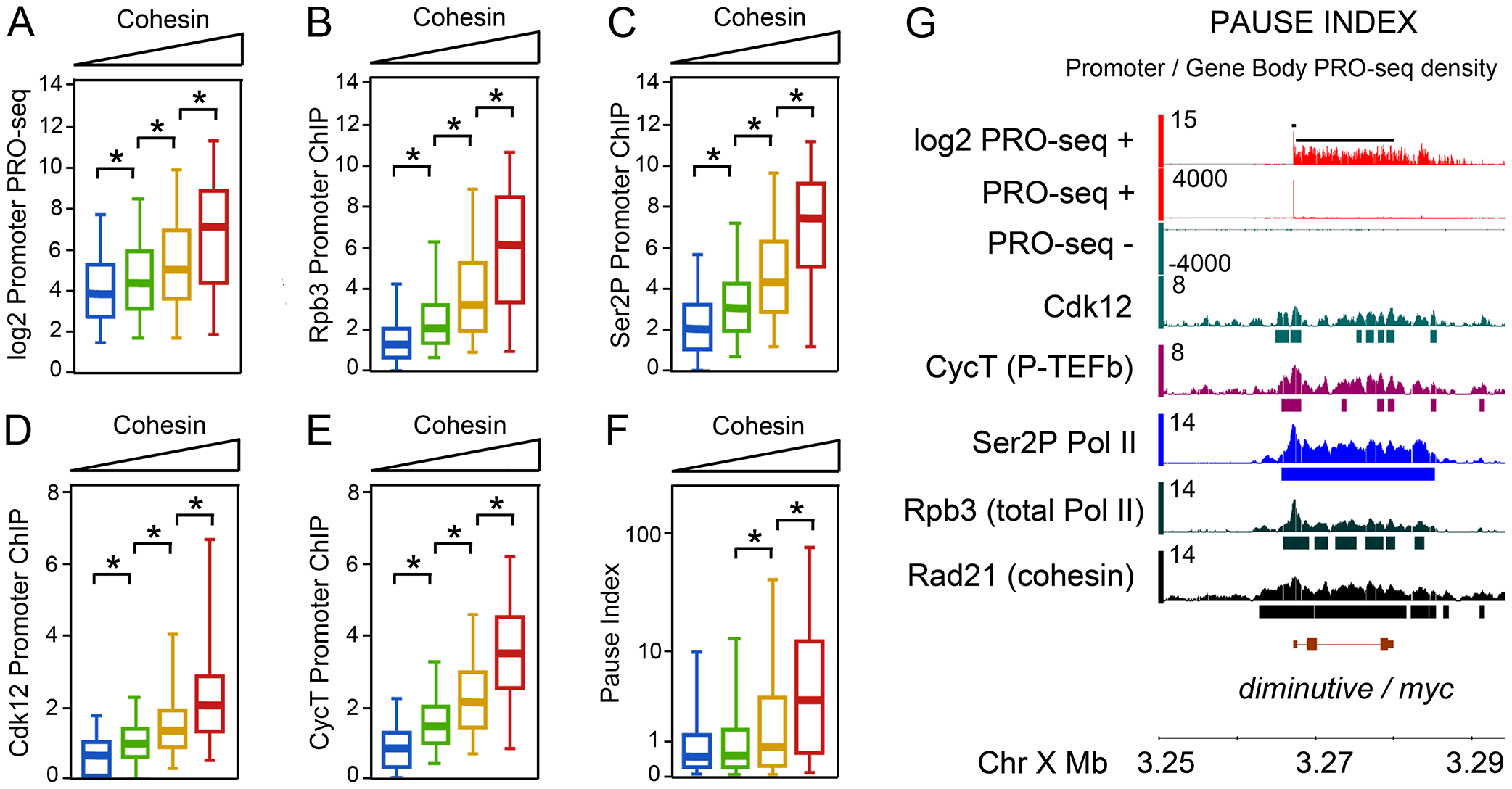 Pol II occupancy and promoter-proximal pausing at active genes correlates with cohesin levels in BG3 cells.