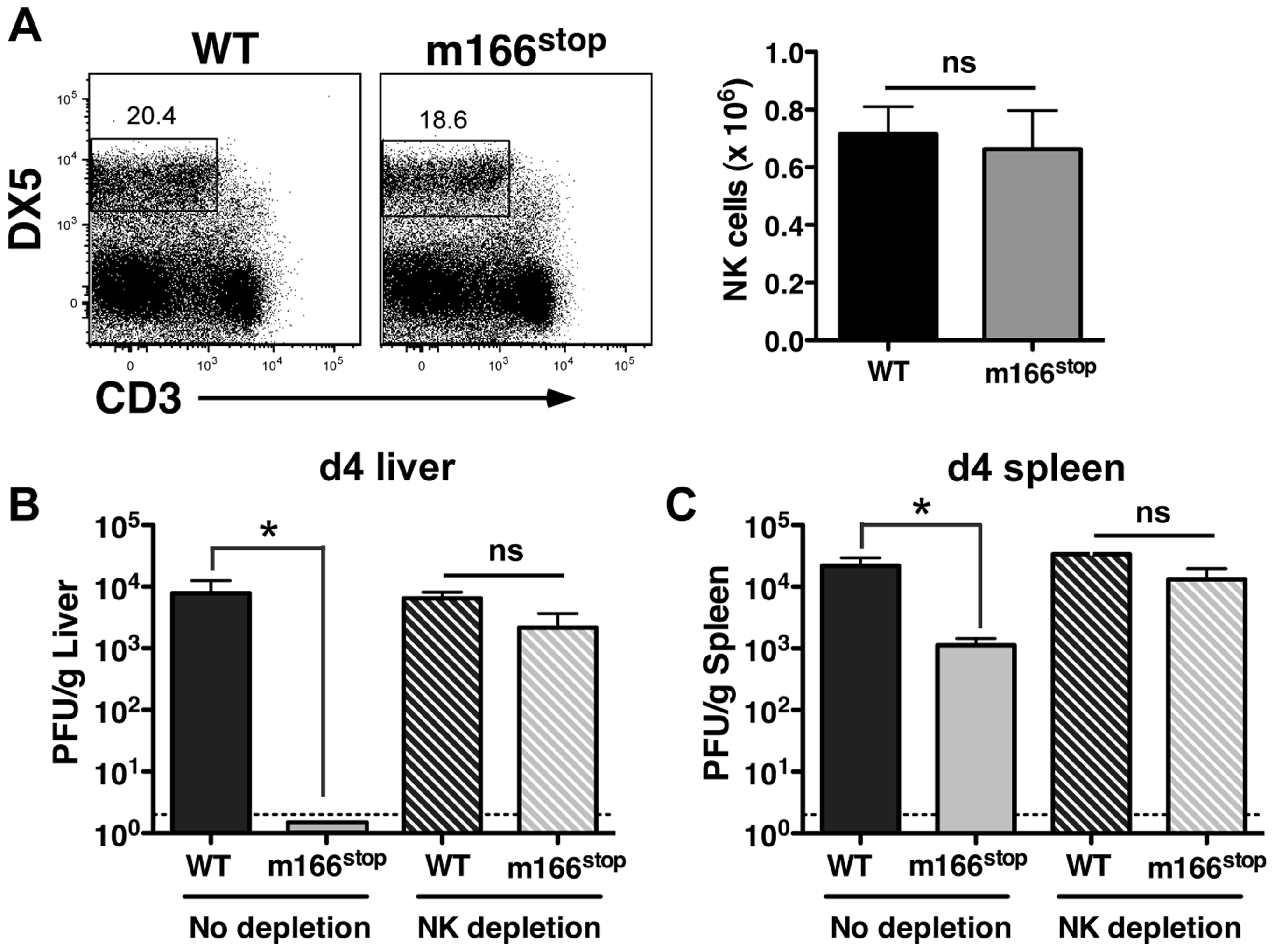 m166 inhibition of TRAIL-DR subverts NK cell antiviral defenses.