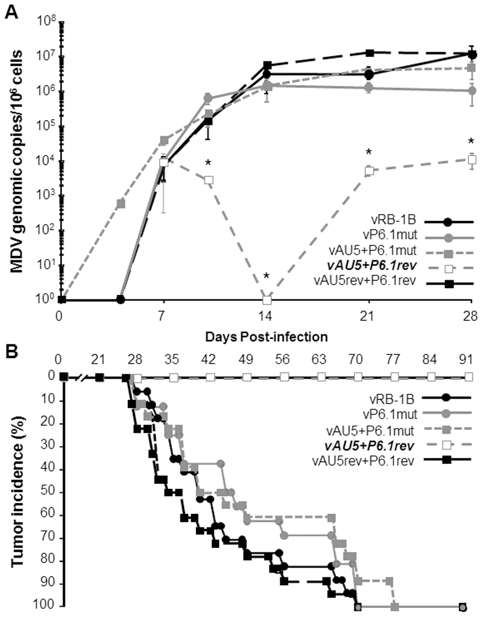 Secondary mutation of the vTR-TERT interaction domain, P6.1, rescues MDV replication and lymphomagenesis.