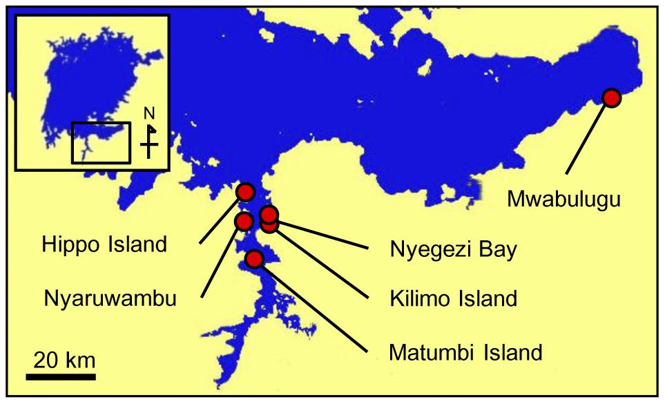 Sampling localities in Lake Victoria.
