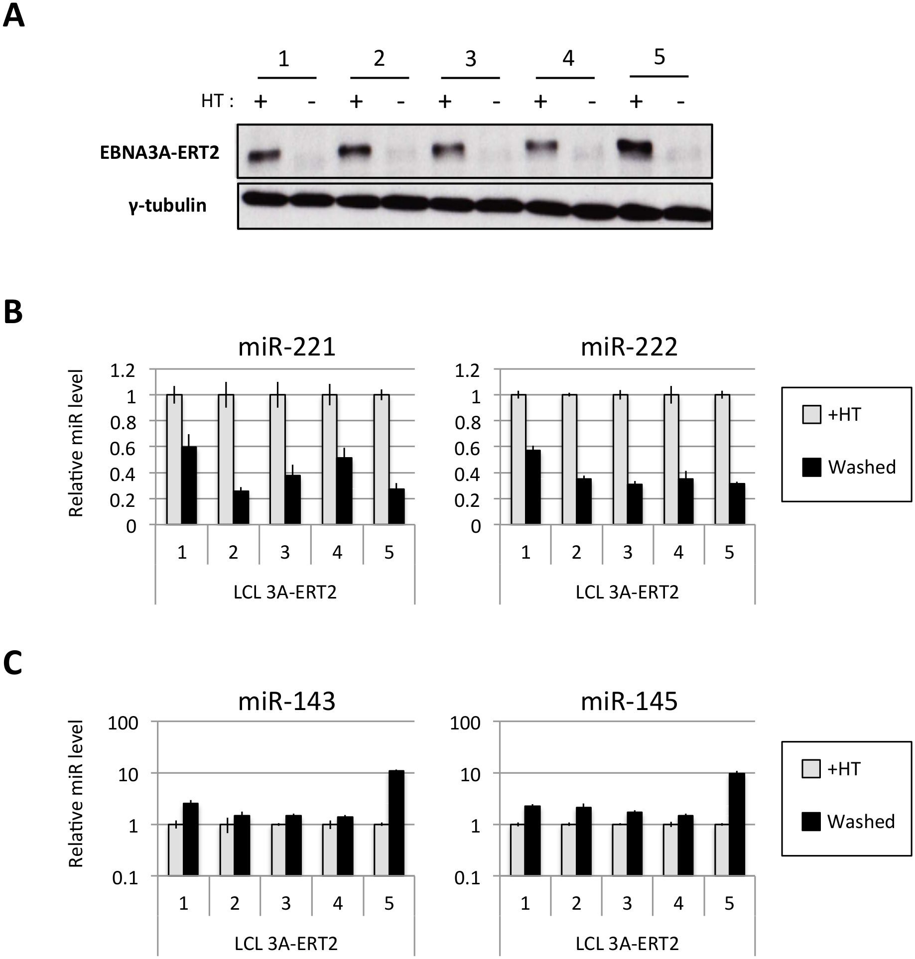 Regulation of miRs in EBNA3A-conditional LCLs.