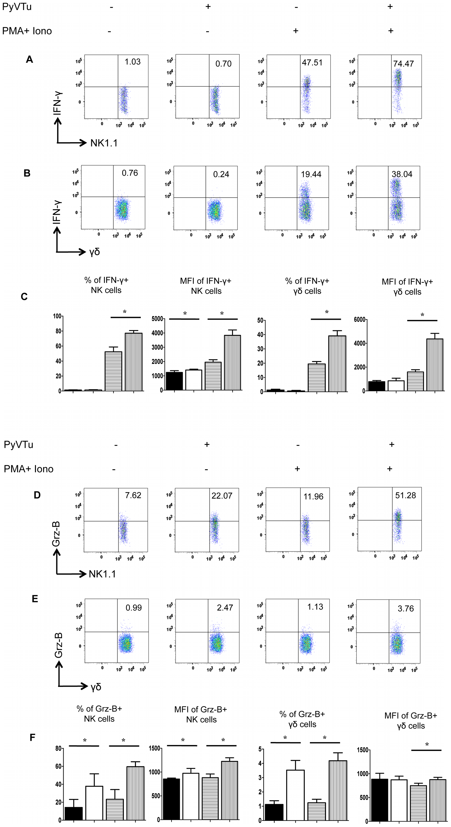 Activation of NK cells and γδ T cells by co-culture with PyVTu cells in vitro.