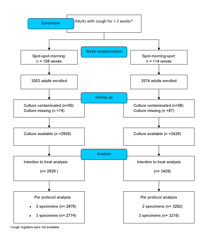 CONSORT flow diagram of the study.