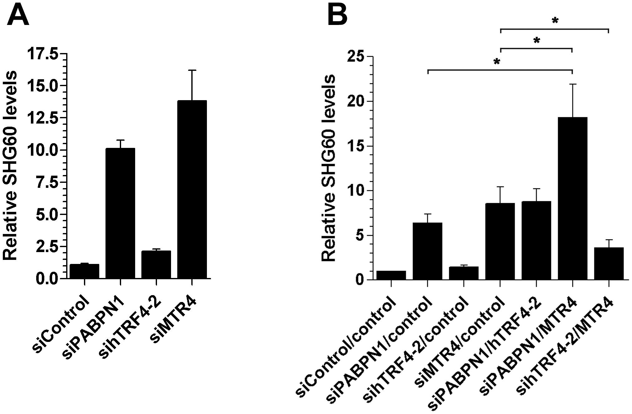 Efficient turnover of a PABPN1–sensitive lncRNA does not require hTRF4-dependent polyadenylation.