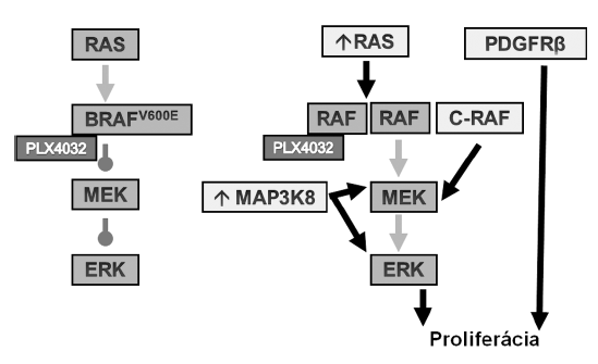 Schéma inhibície mutovaného BRAF (vľavo) a mechanizmy rezistencie (<em>vpravo</em>).