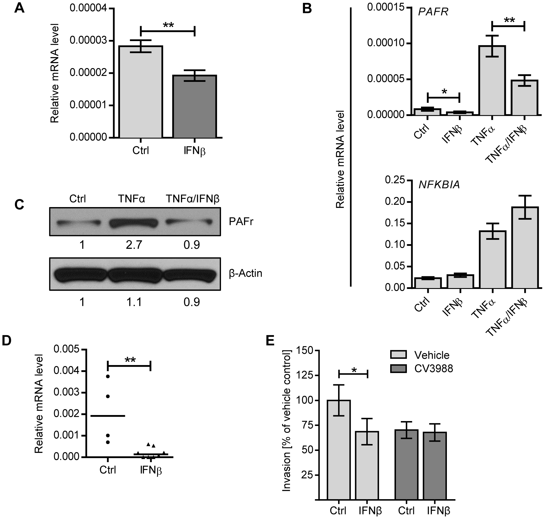 IFNβ reduces PAF receptor levels on lung epithelial and endothelial cell lines and in the lung.