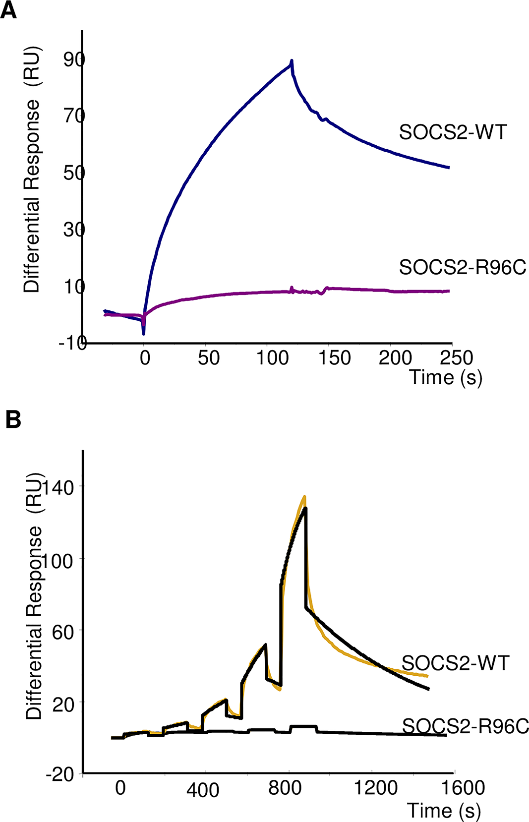 Real-time binding of SOCS2-WT and SOCS2-p.R96C proteins on immobilized pY-GHR.