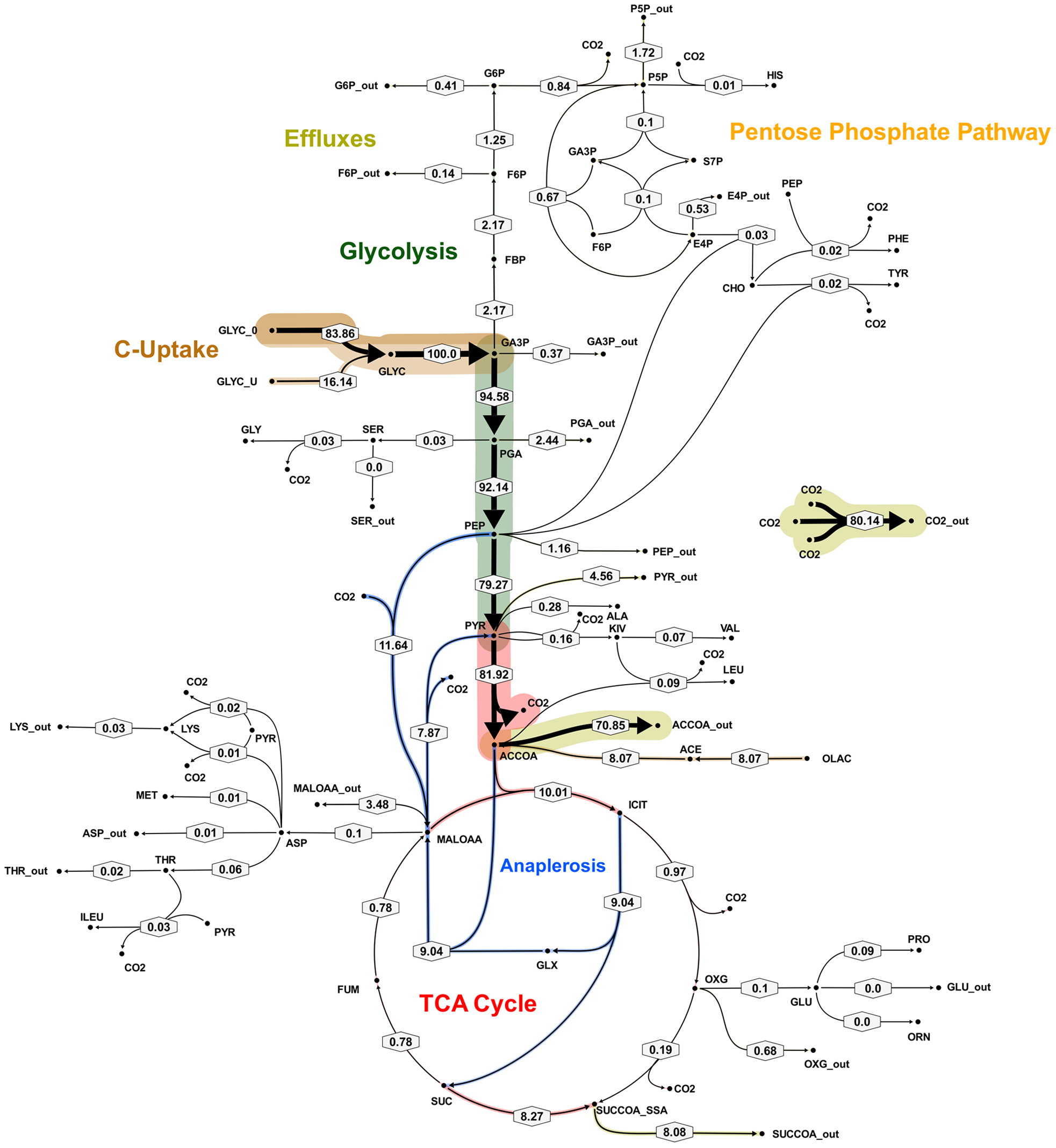 Metabolic flux map B for <i>M. bovis</i> BCG in glycerol limited continuous culture at slow growth rate (t<sub>d</sub> = 69 h).