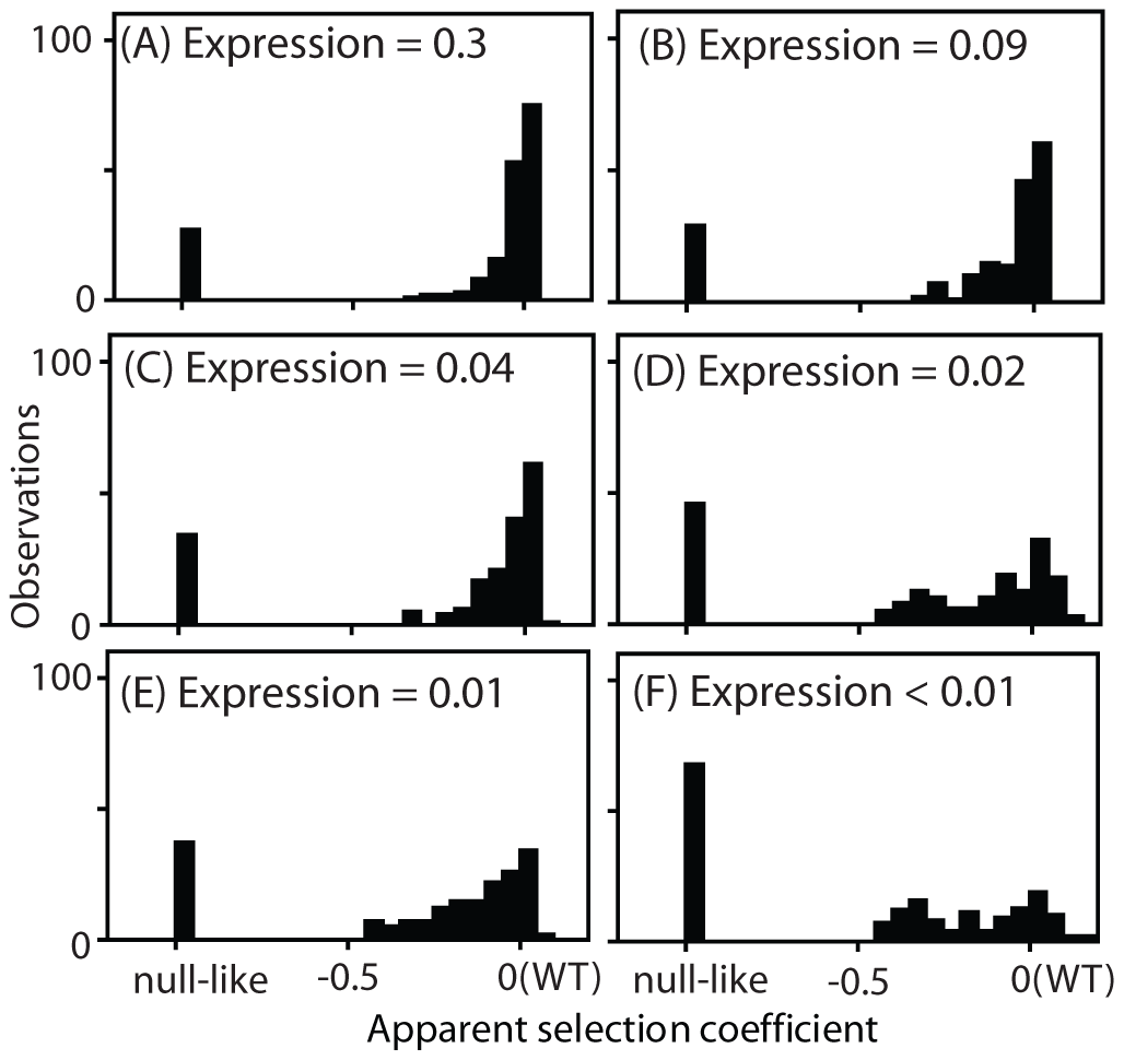 Distribution of observed fitness effects.