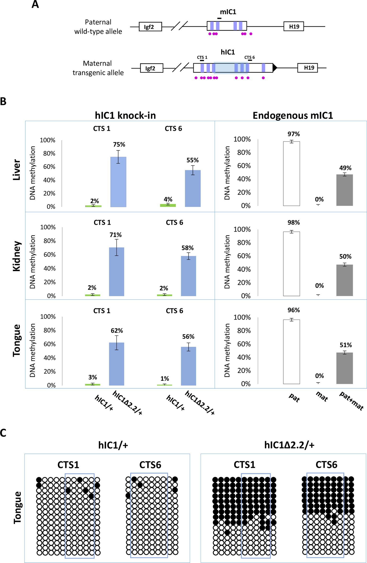 Gain of IC1 methylation in <i>H19</i><sup><i>hIC1</i>Δ<i>2</i>.<i>2/+</i></sup> mice.
