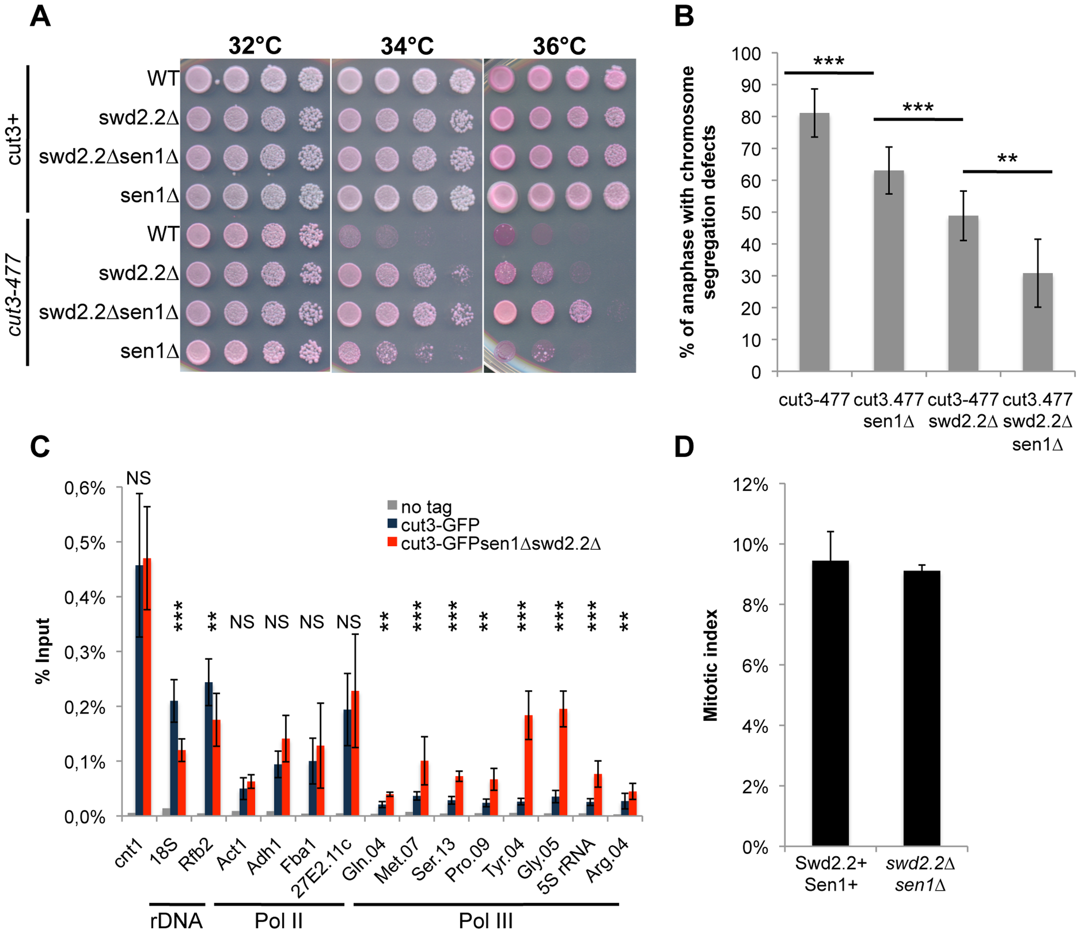 The double deletion of Swd2.2 and Sen1 facilitates the localization of condensin at Pol III-transcribed genes.
