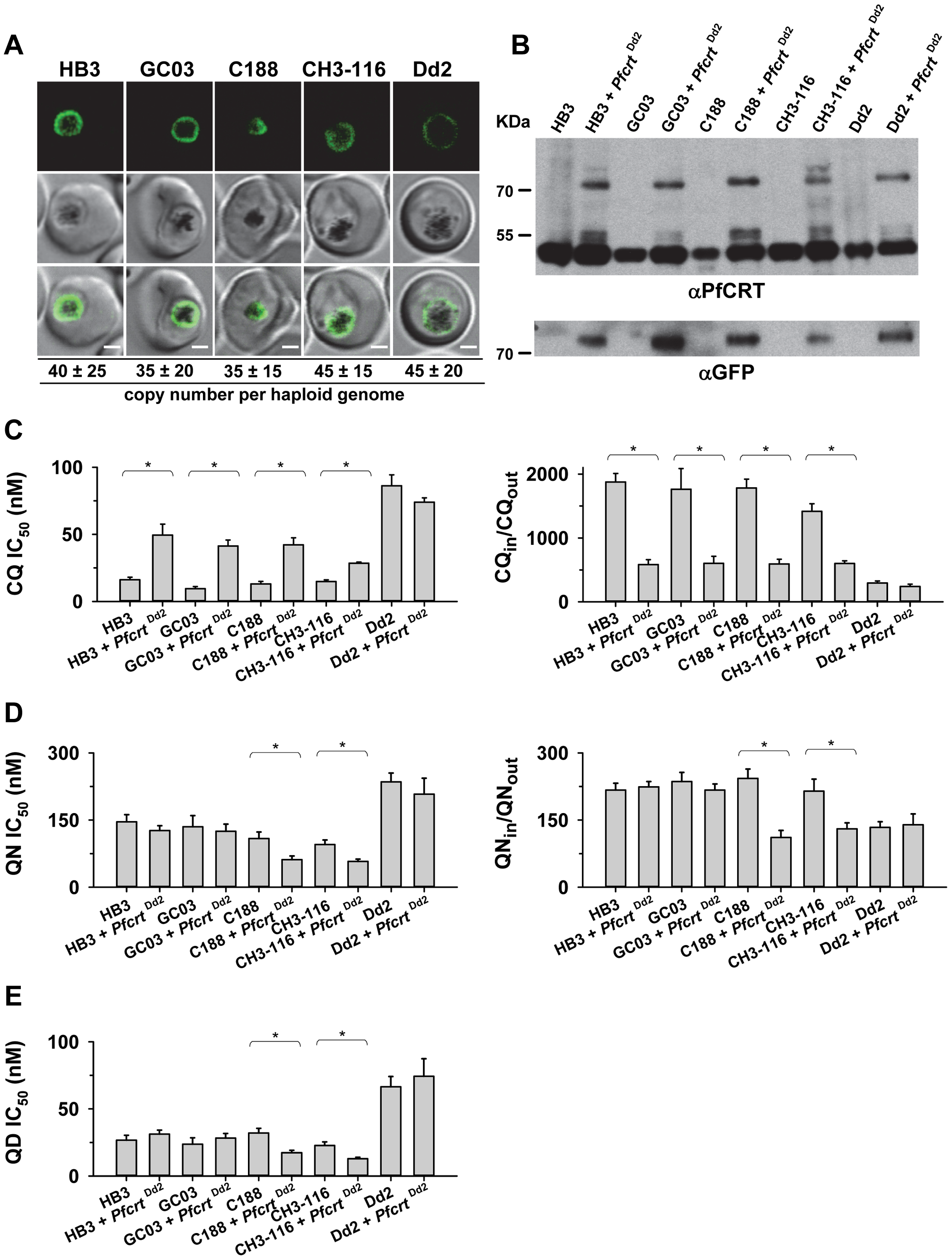 Functional association between the B5M12 locus and mutant PfCRT in conferring quinine and quinidine response variations.