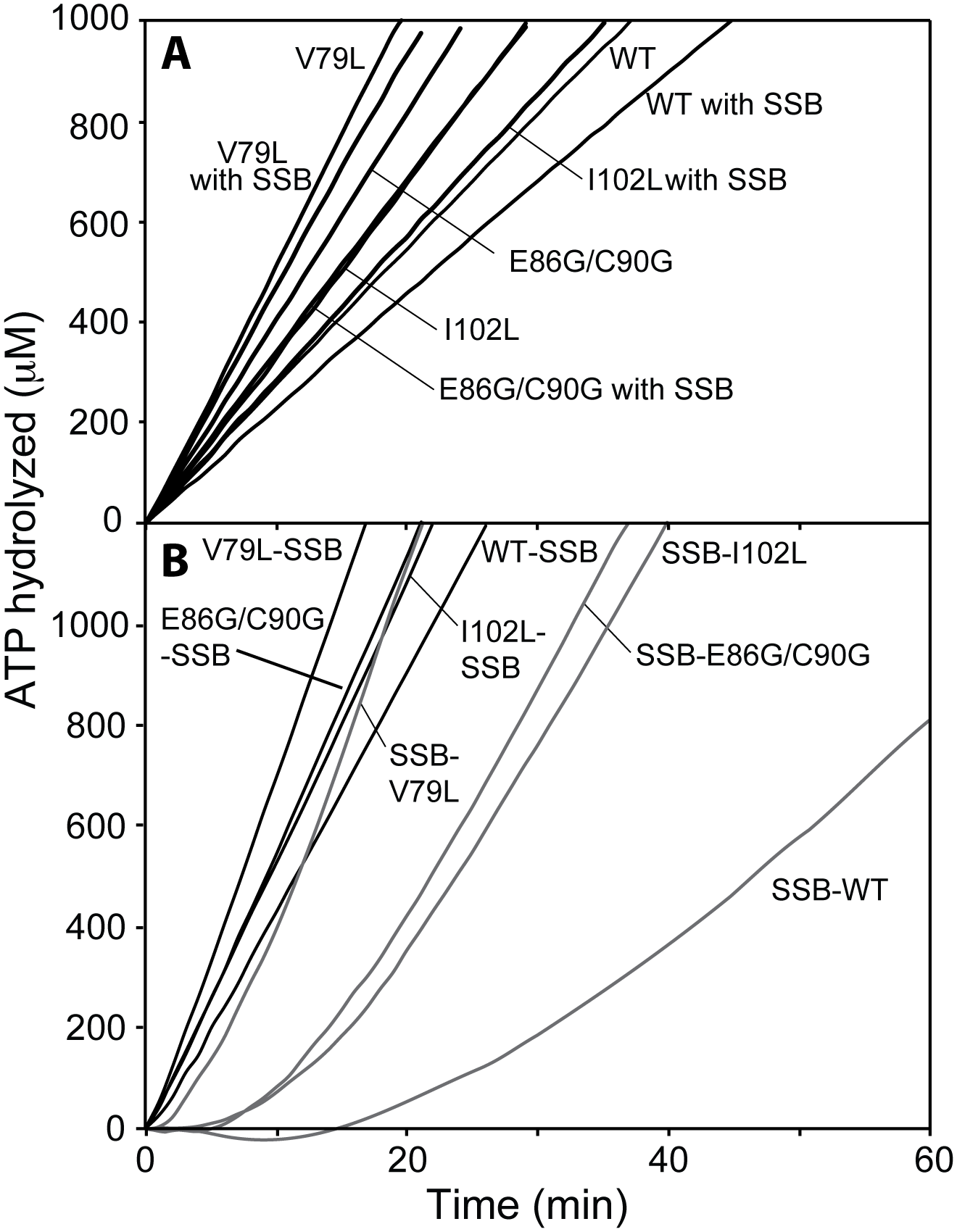 DNA-dependent ATPase activity of selected RecA variant proteins.