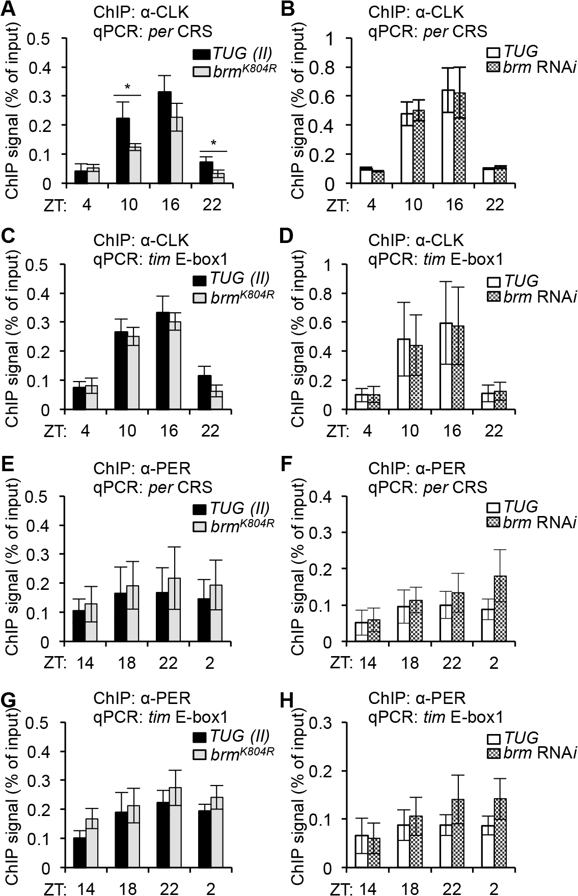 The non-catalytic function of BRM negatively impacts CLK binding to the <i>per</i> promoter.