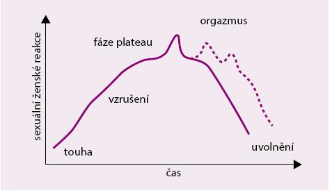 Model ženských sexuálních reakcí. Upraveno podle [9]