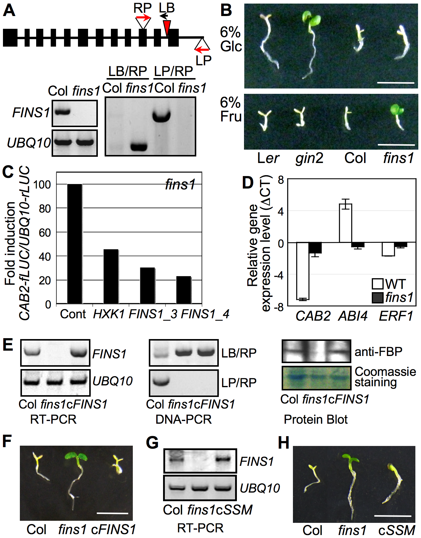 FINS1/FBP in fructose signaling.